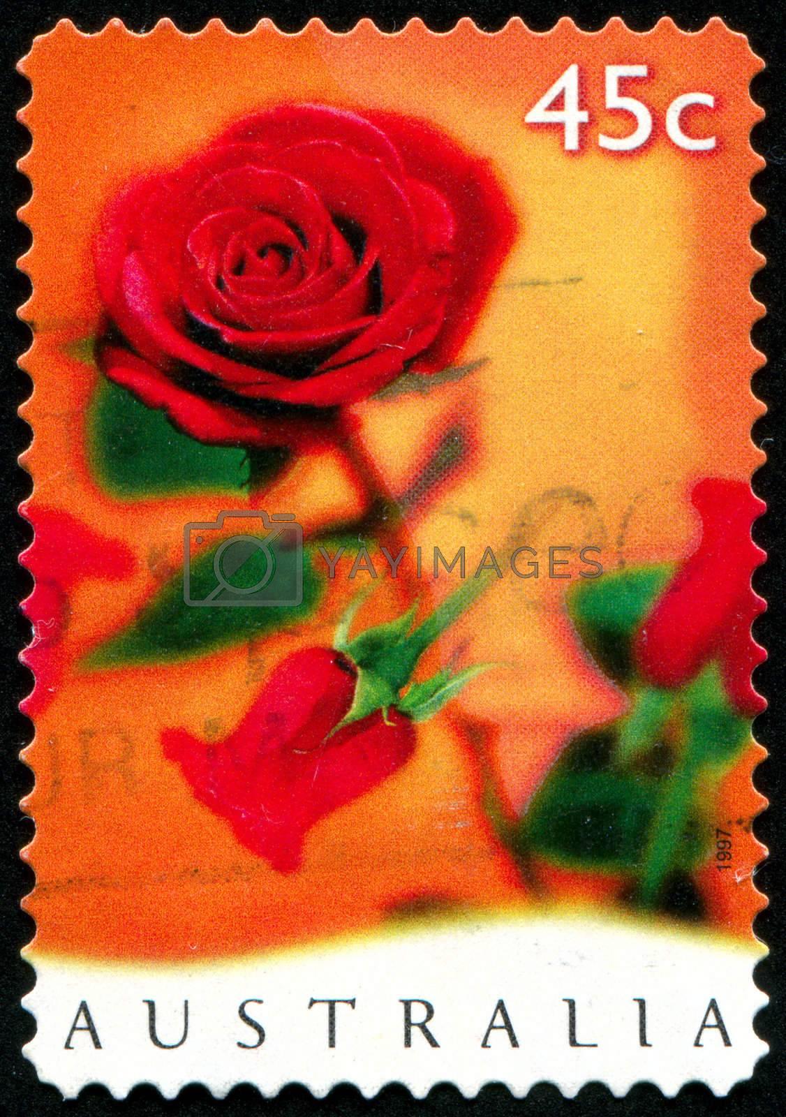 AUSTRALIA - CIRCA 1997: stamp printed by Australia, shows rose, circa 1997
