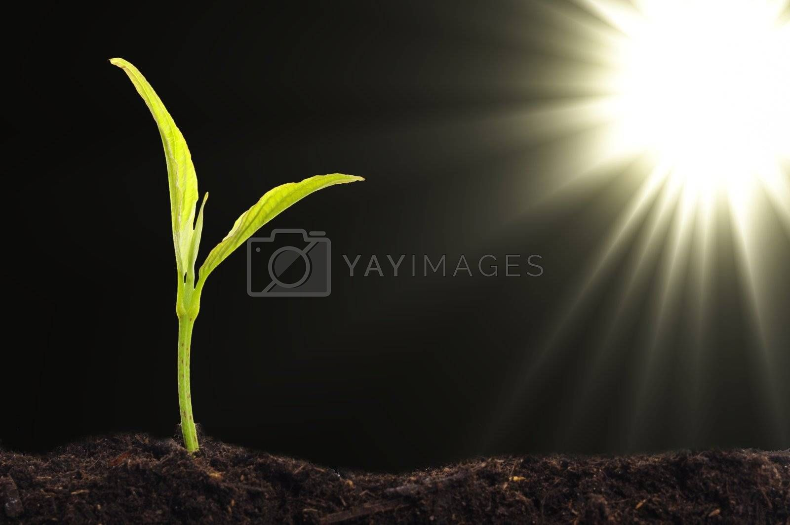 Royalty free image of small plant by gunnar3000
