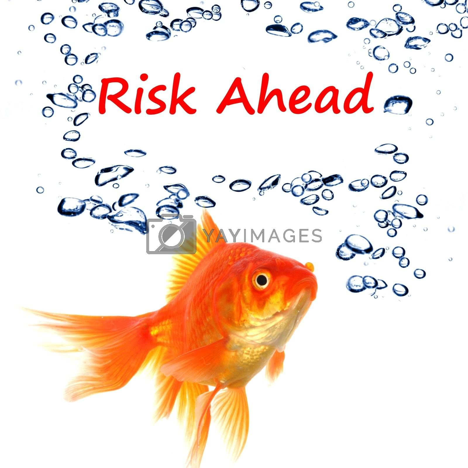 Royalty free image of risk ahead  by gunnar3000