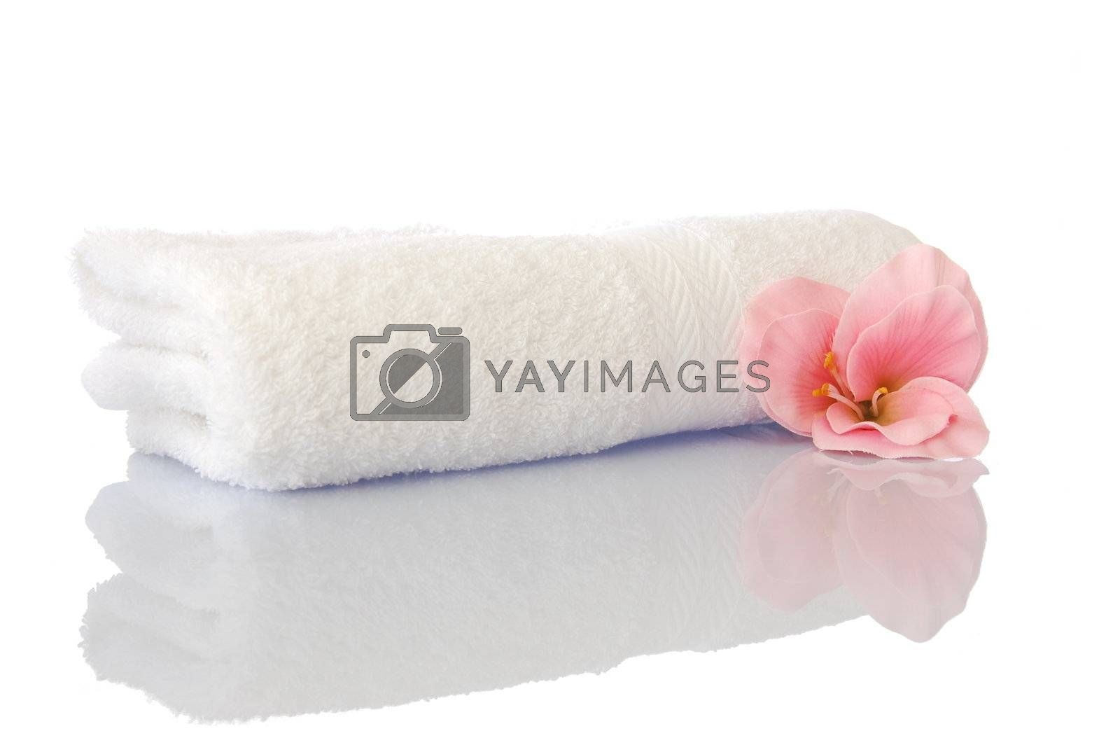 spa zen and wellness concept isolated on white background