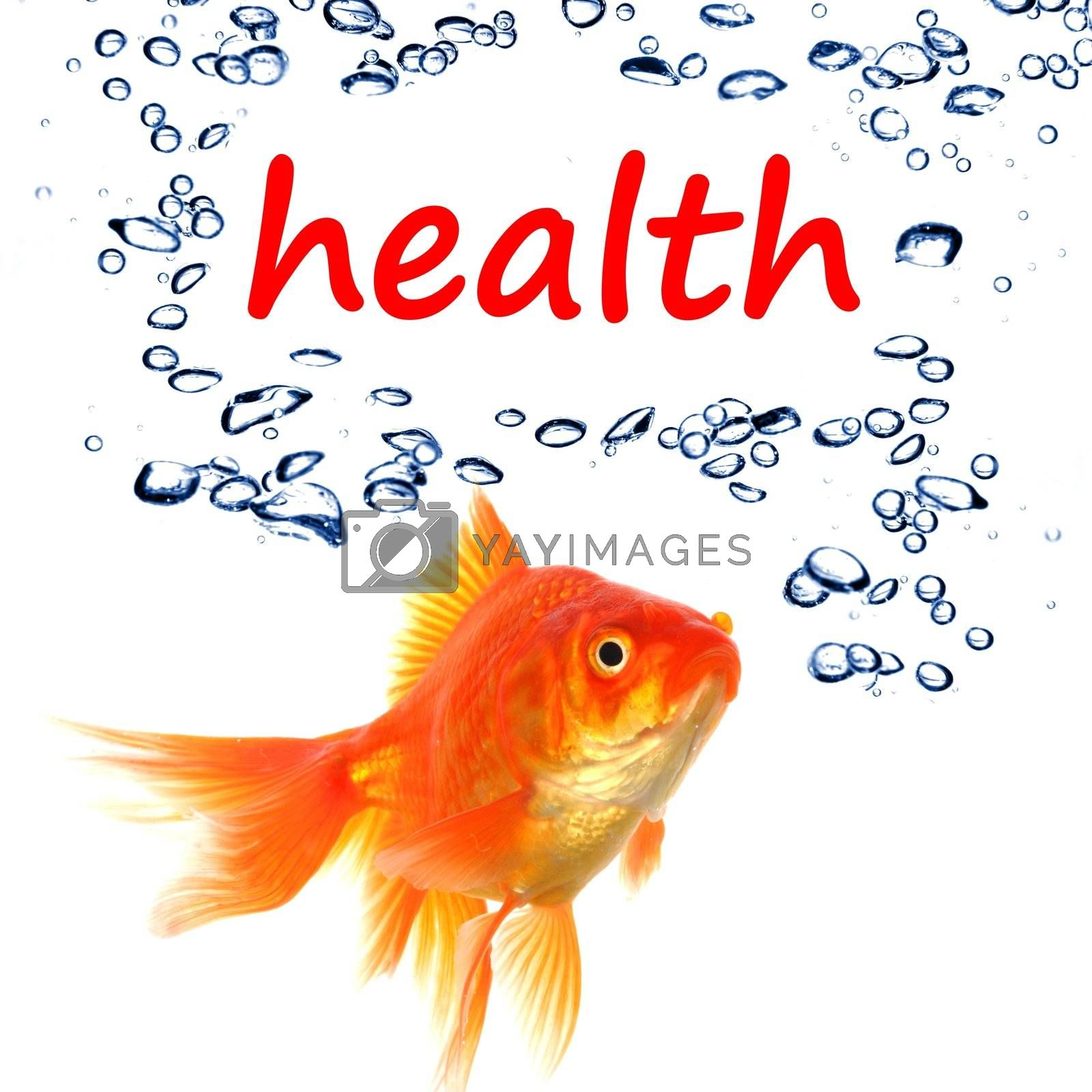 word health and goldfish showing spa or healthy lifestyle concept