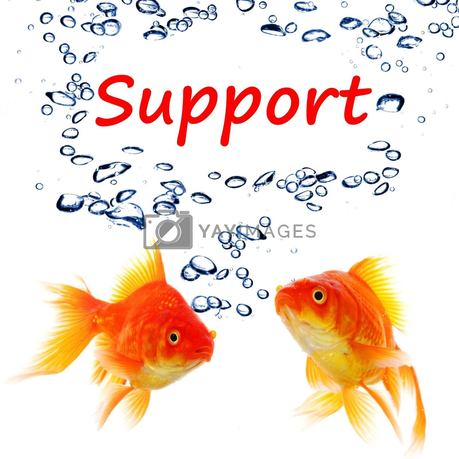 support or contact us concept with goldfish and water bubbles on white