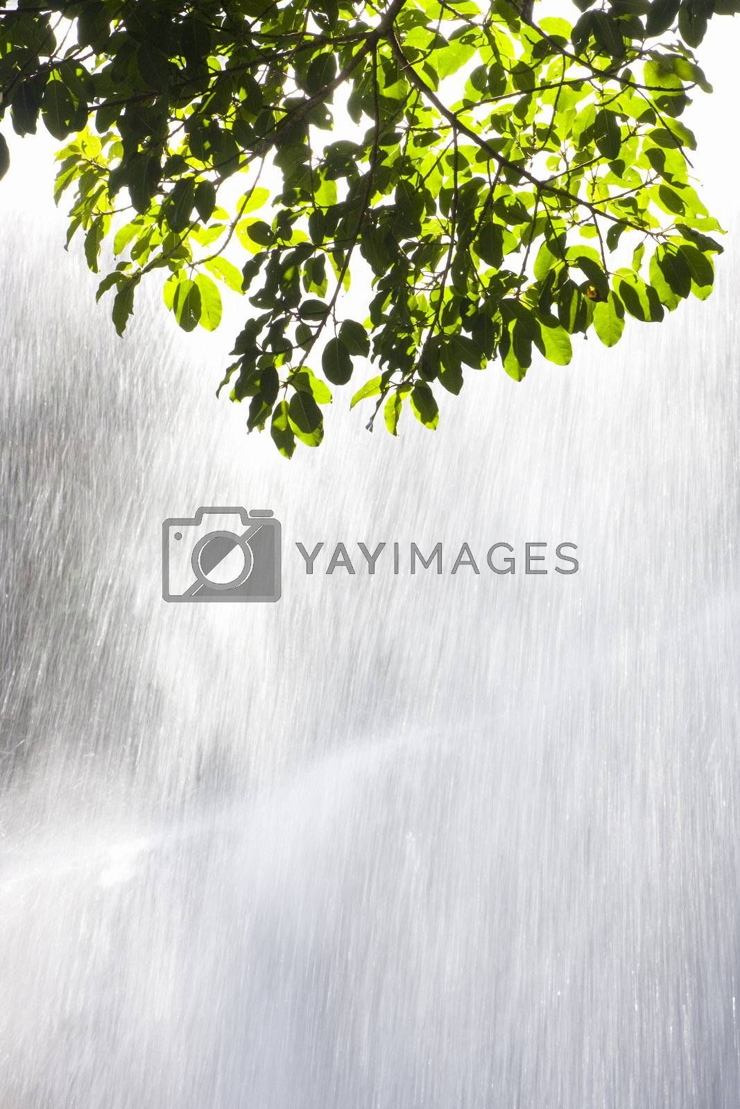 Sunlight on green leaves in front of a waterfall