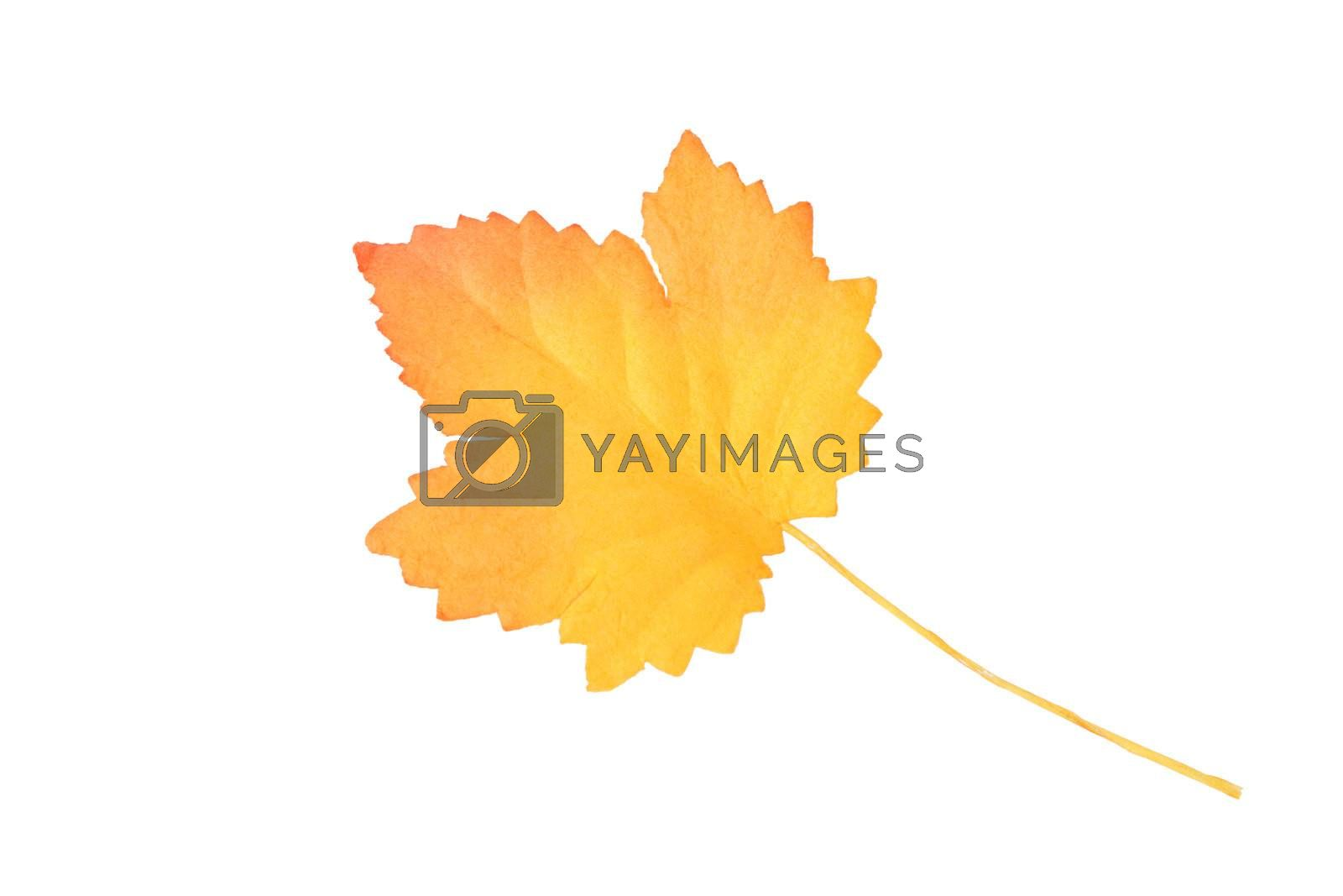 Autumn Leaf by vanell