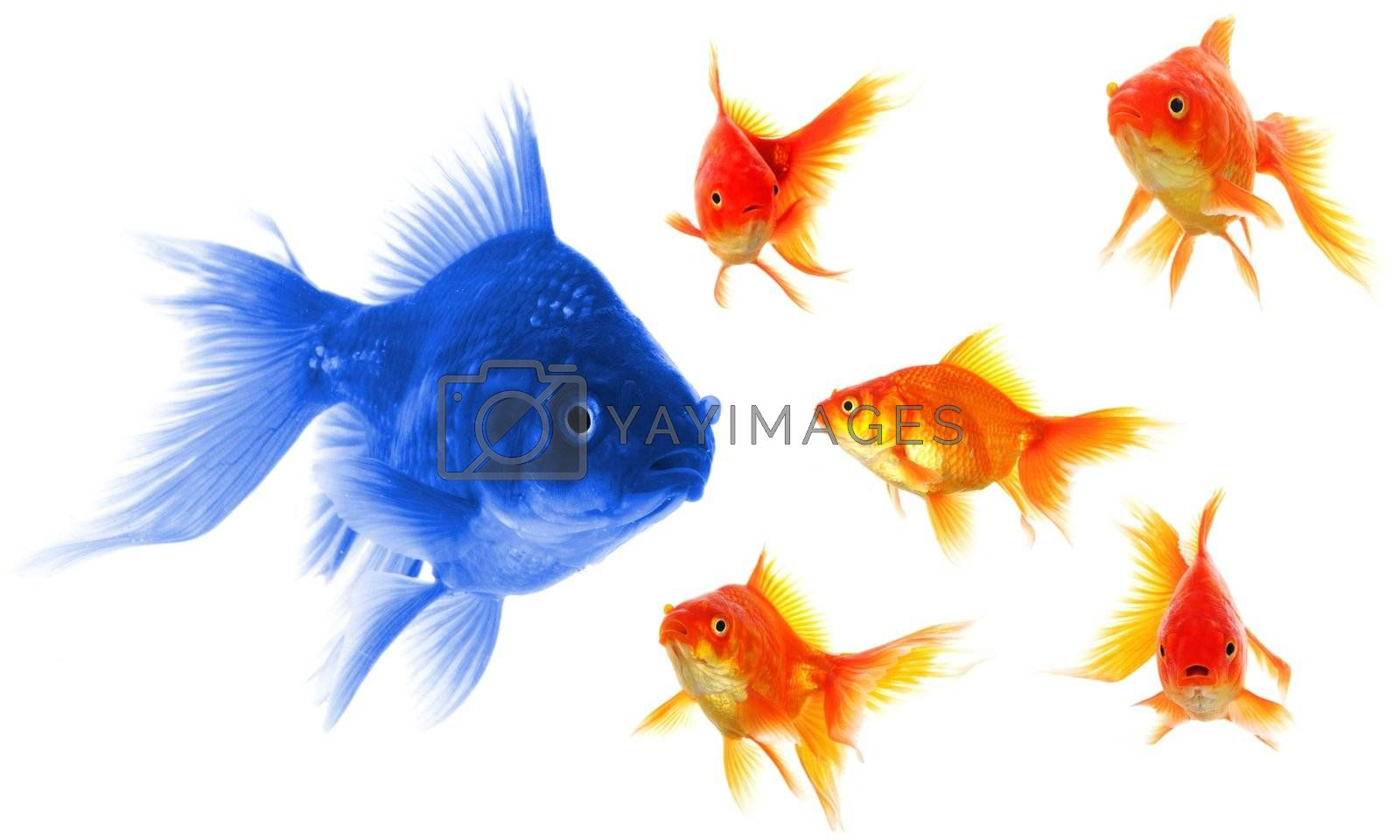 individual success winner outsider boss or motivation concept with goldfish isolated on white