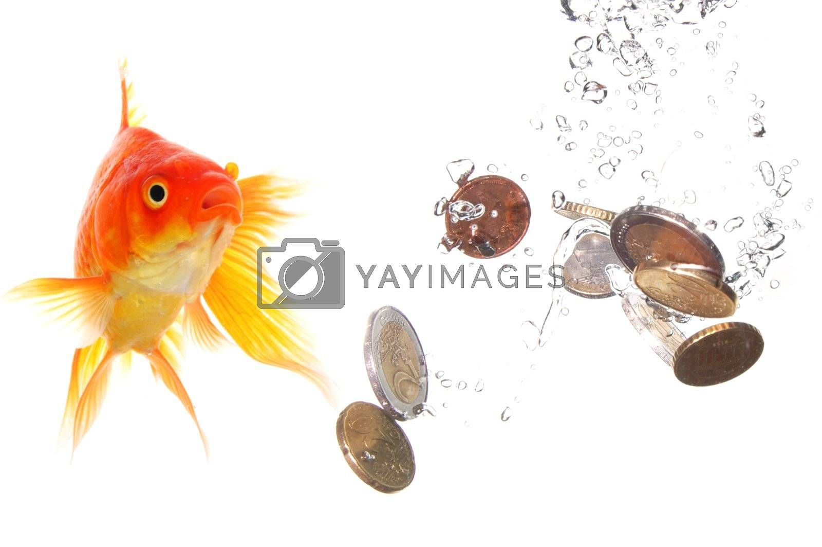 Royalty free image of goldfish and money by gunnar3000