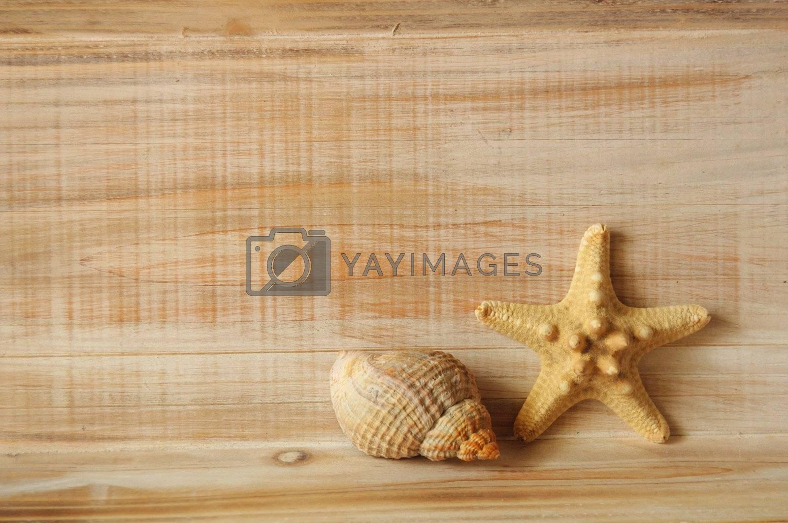 Royalty free image of star fish by gunnar3000