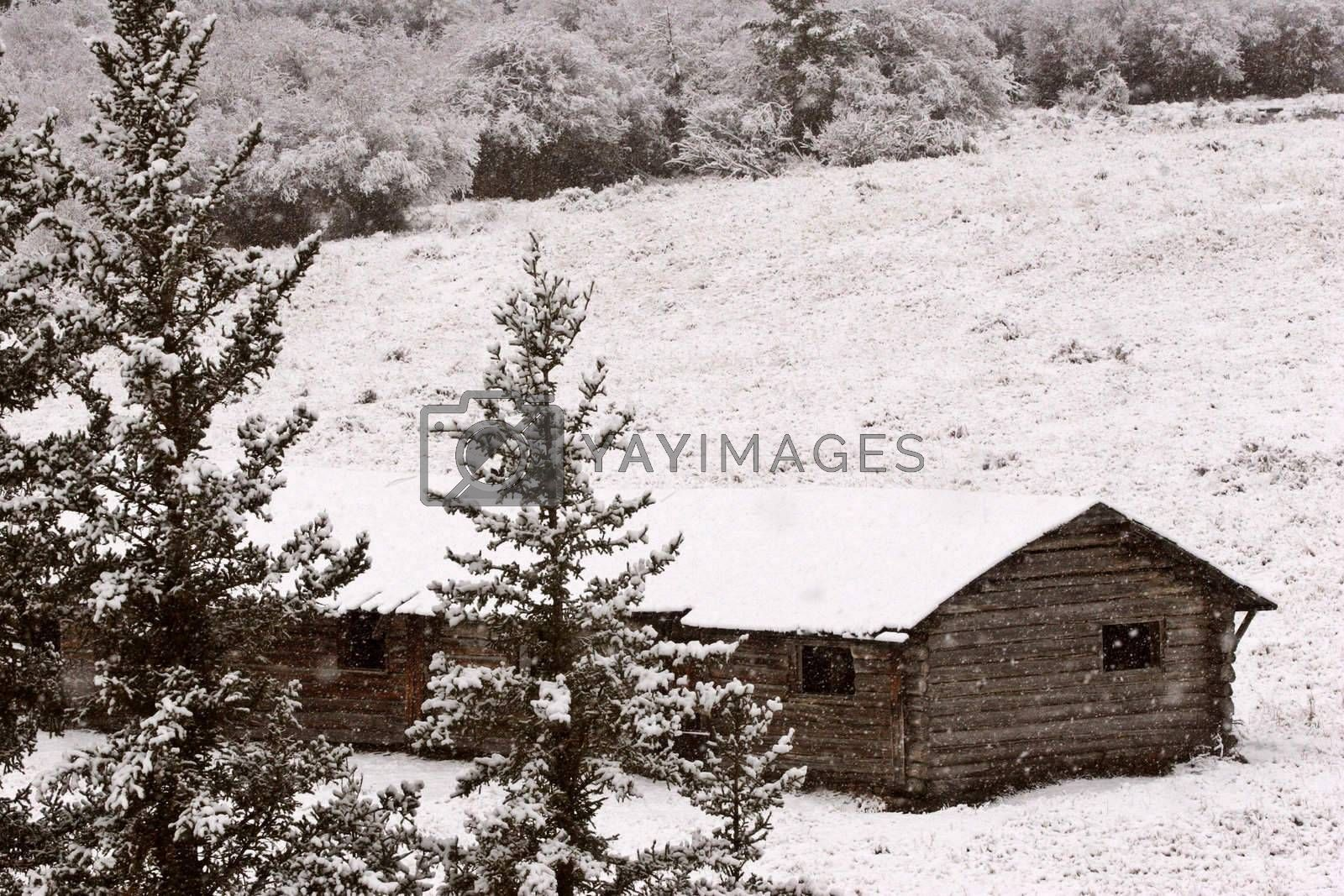 Abandoned ranch house in winter in the Cypress Hills