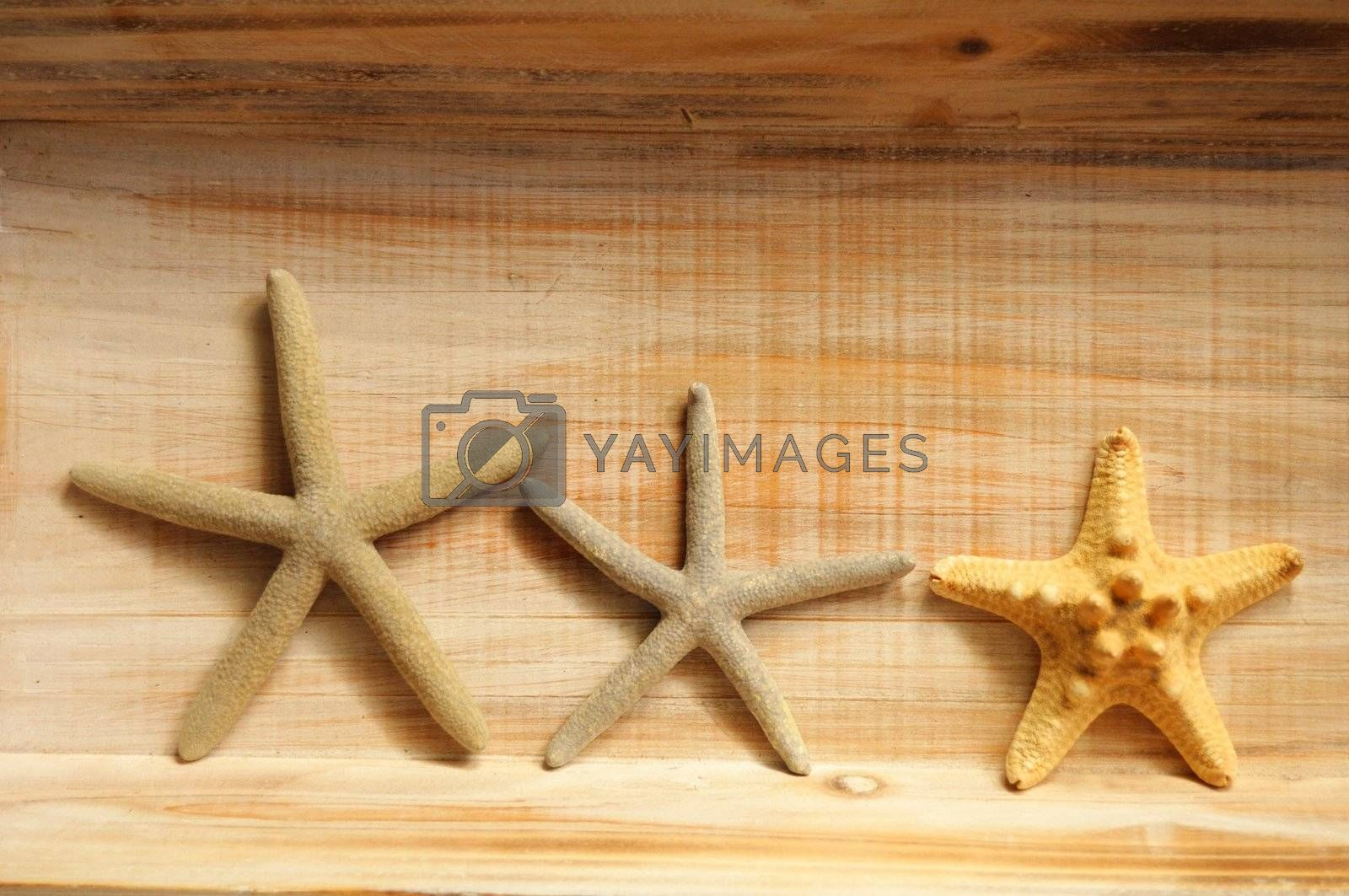 star fish and wood copyspace showing holiday or vacation concept