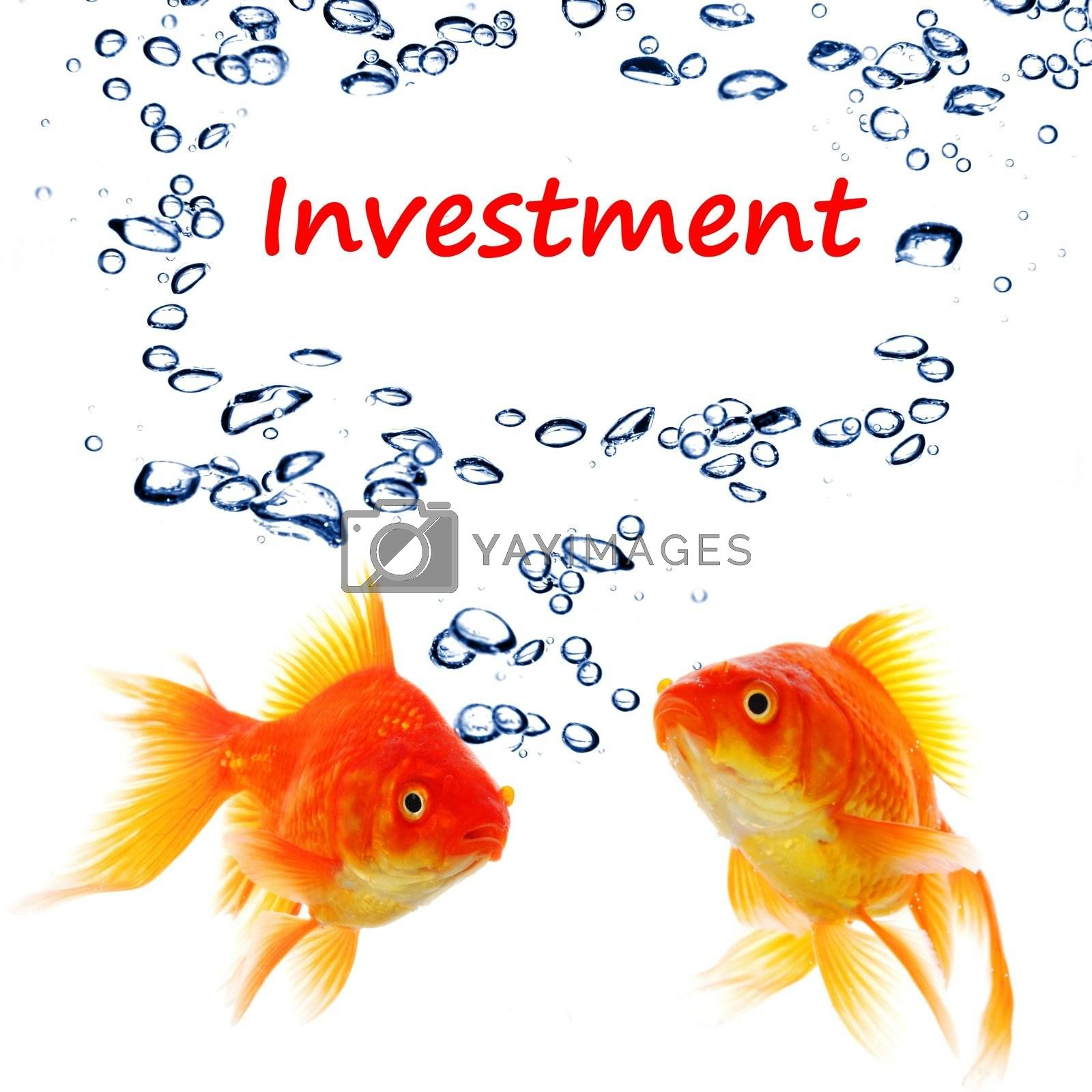 investment invest finance financial or business concept with goldfish on white