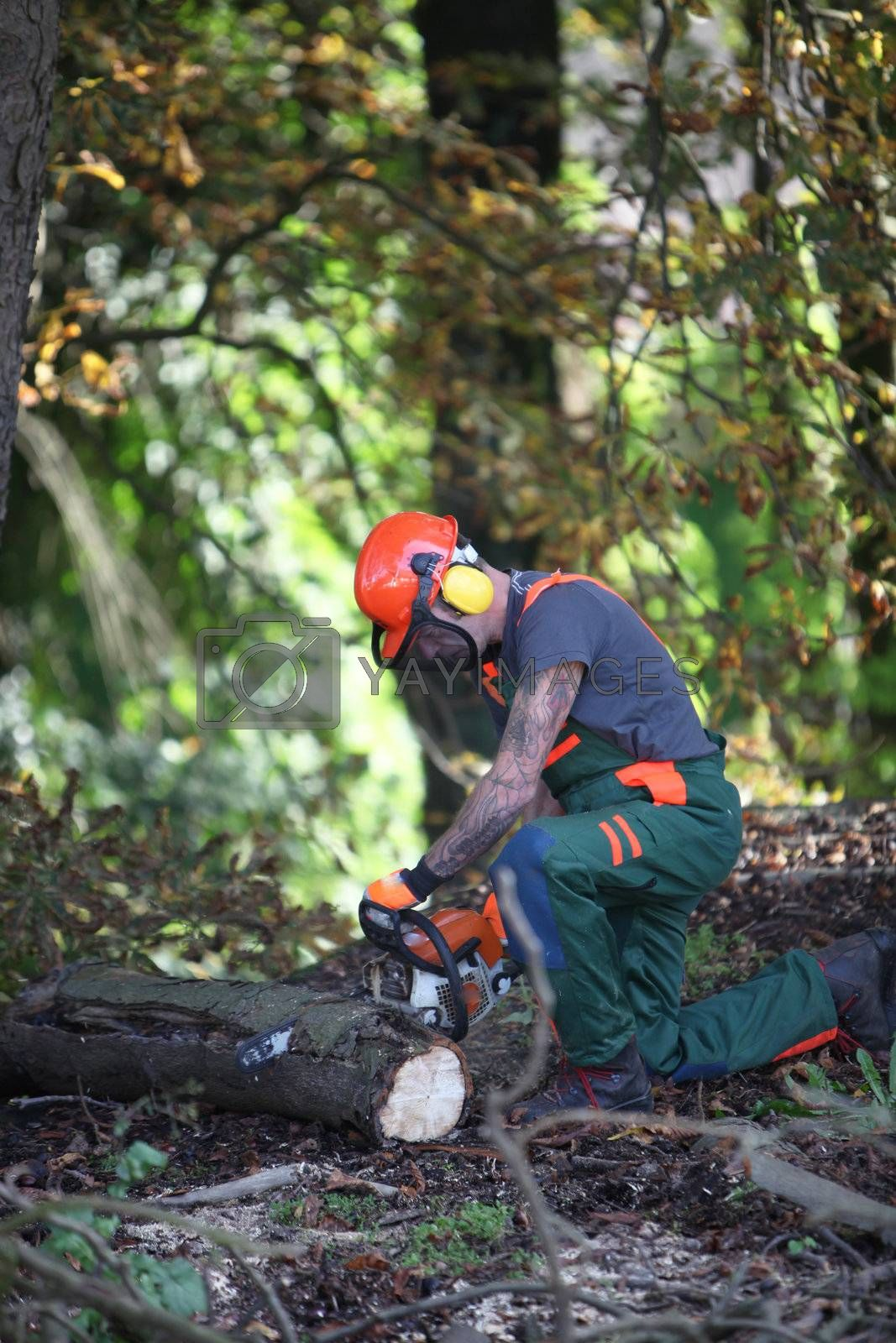 A forestry worker sawing a tree trunk. He is wearing protective clothing