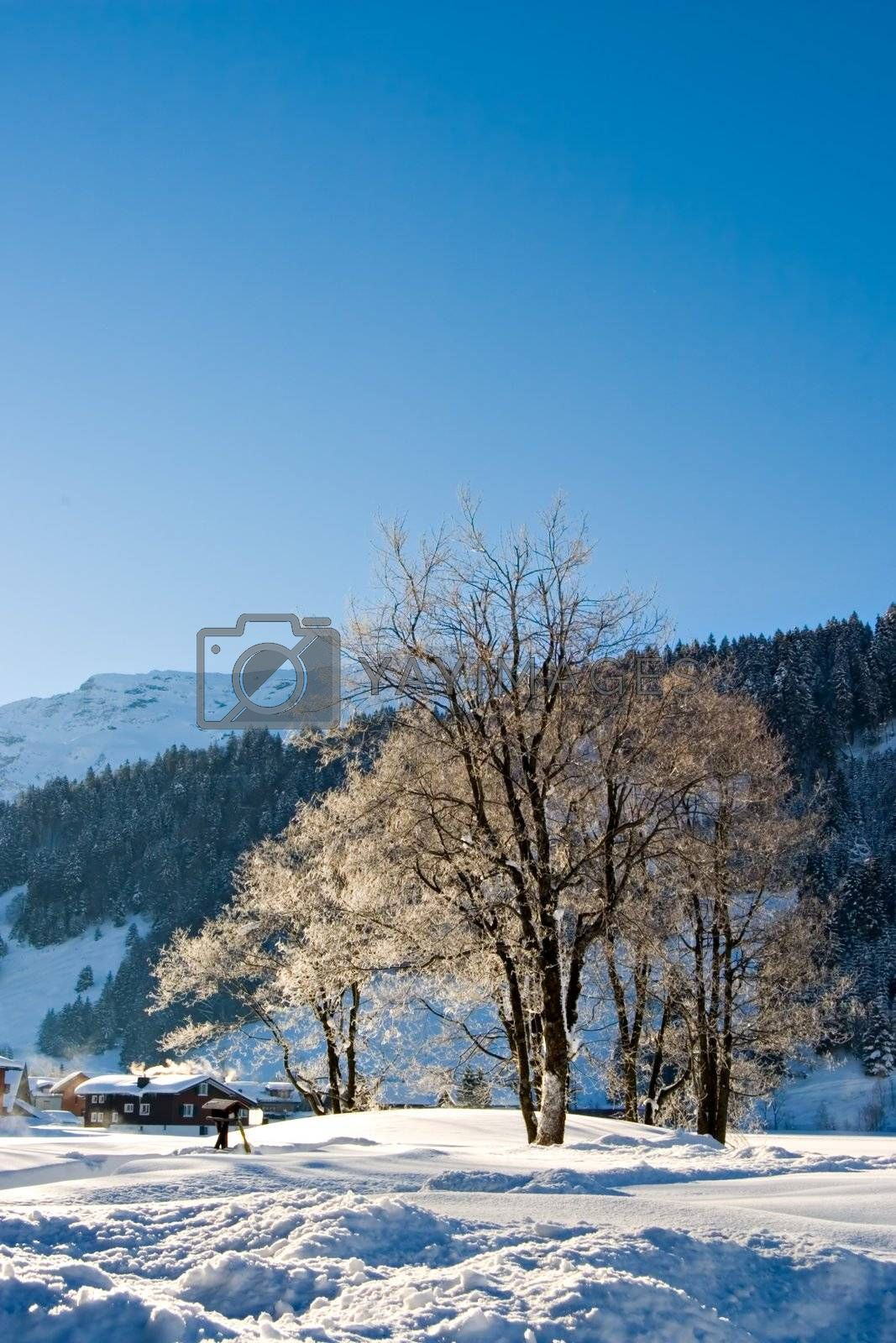 Snowy winter morning in the Swiss Alps
