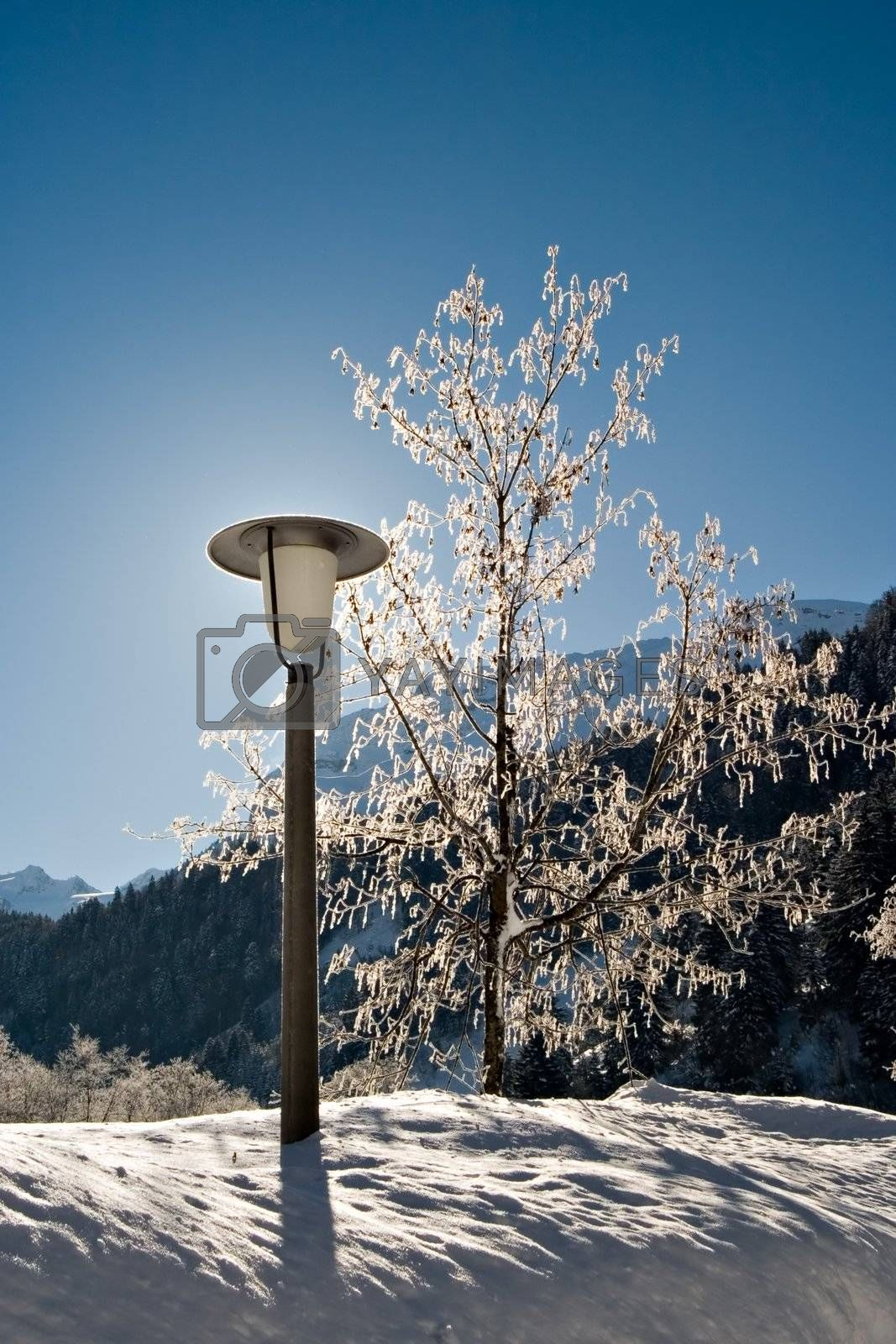 Lamp-post and tree in winter with blue sky