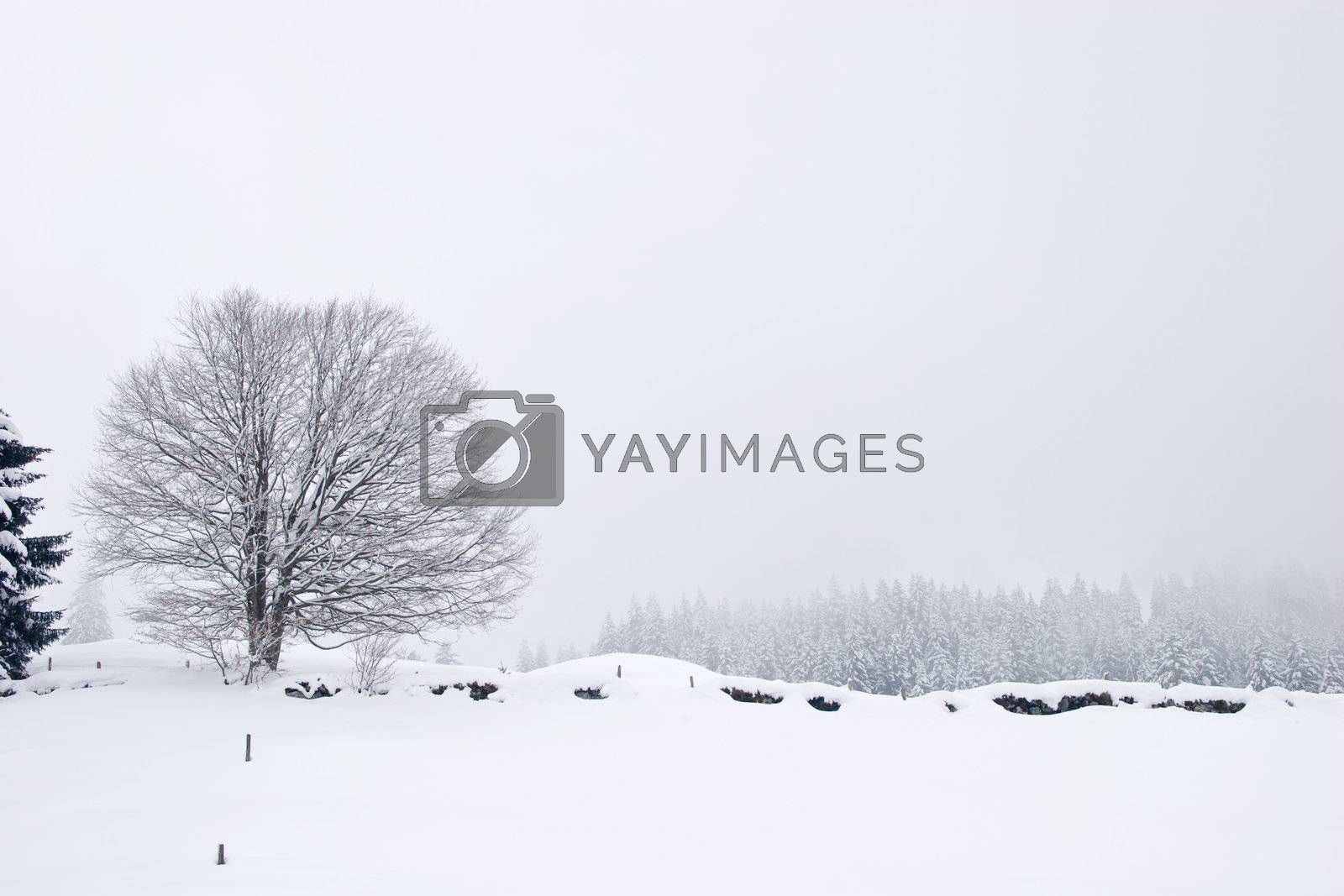 Photo of winter landscape. Trees in snow on winter time. Switzerland, Europe