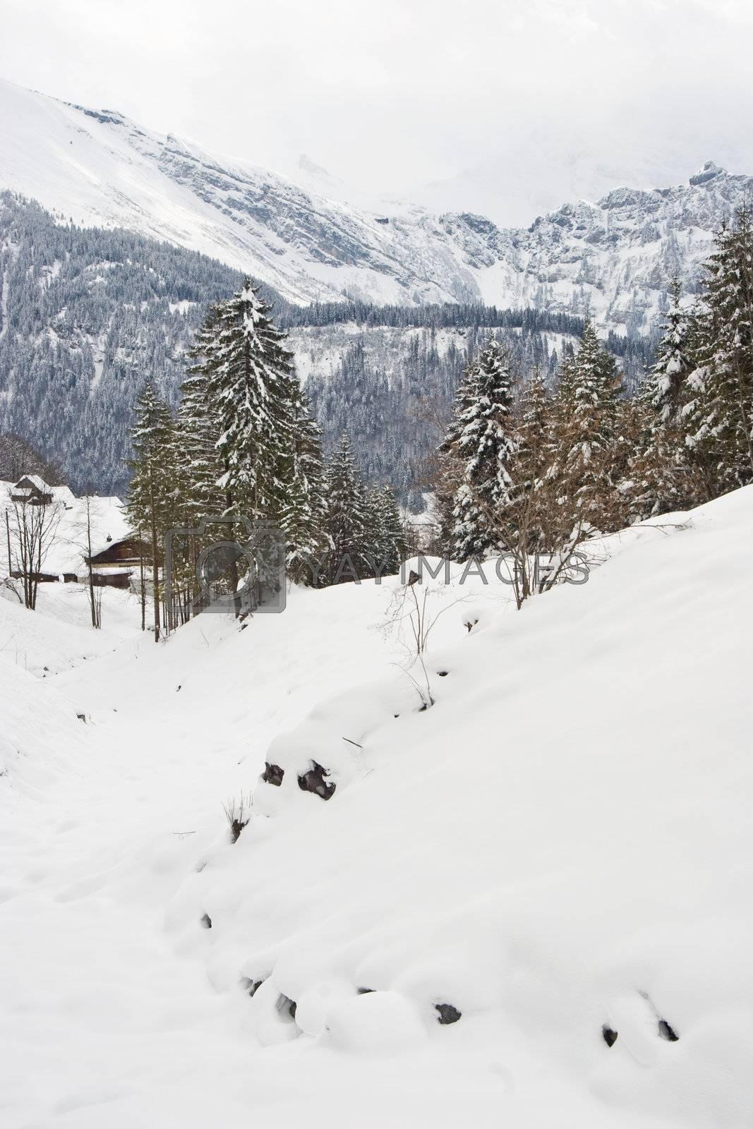 Winter landscape in Switzerland.