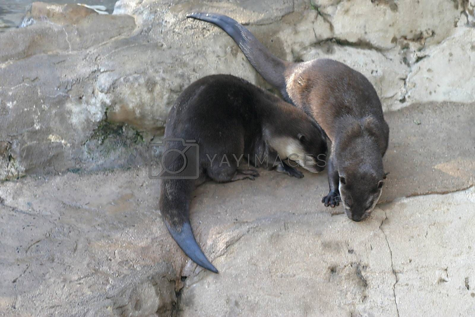 Otter (4659) by hlehnerer