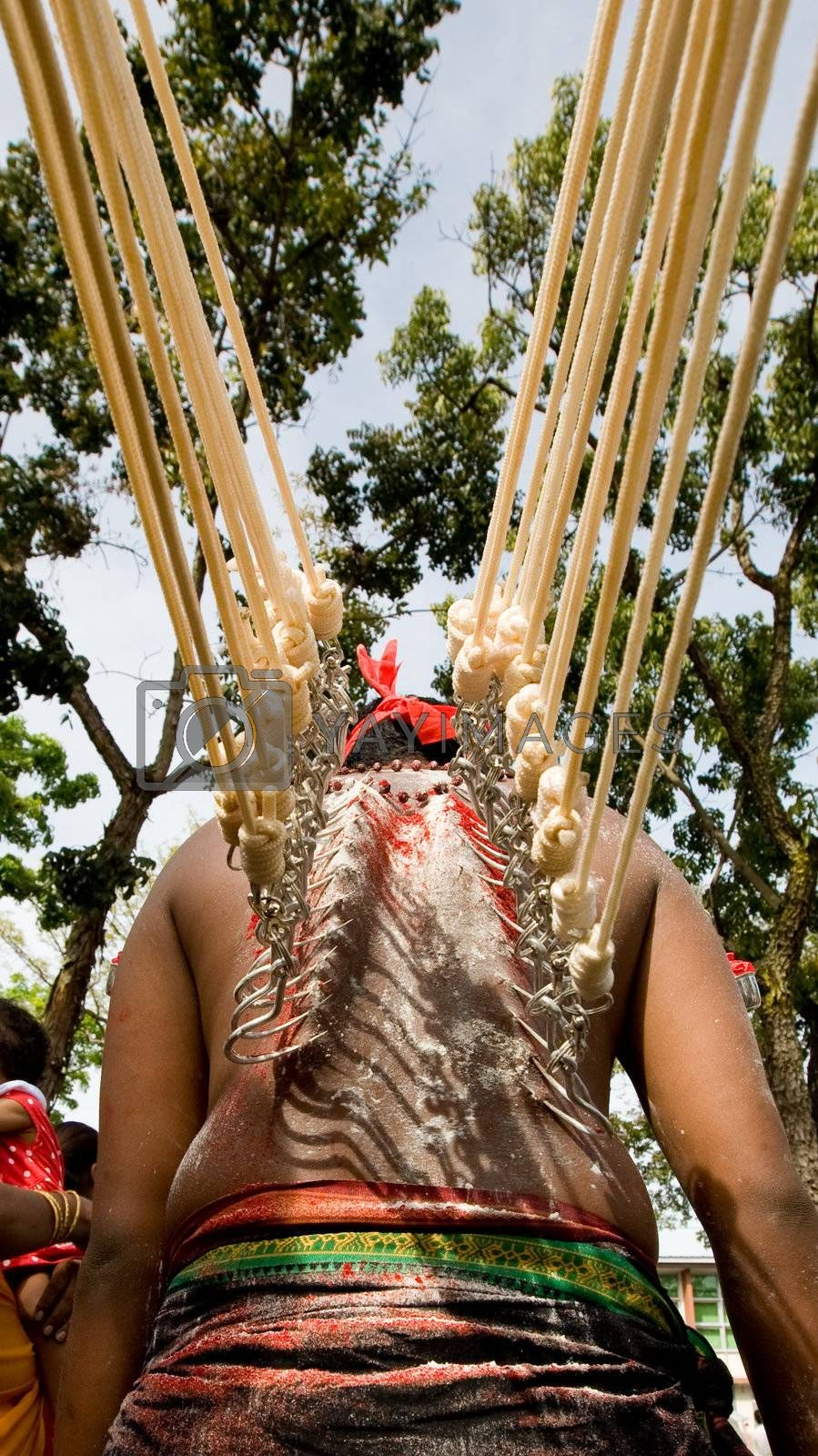 thaipusam devotee with hooks on their back with ropes pulling