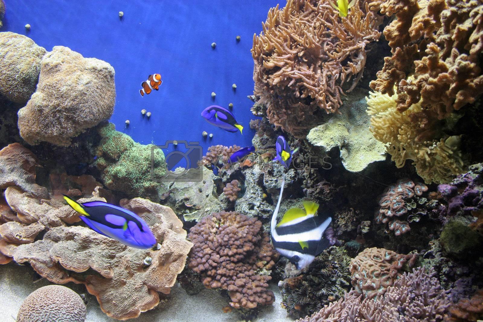 Aquarium 9 by dbvirago