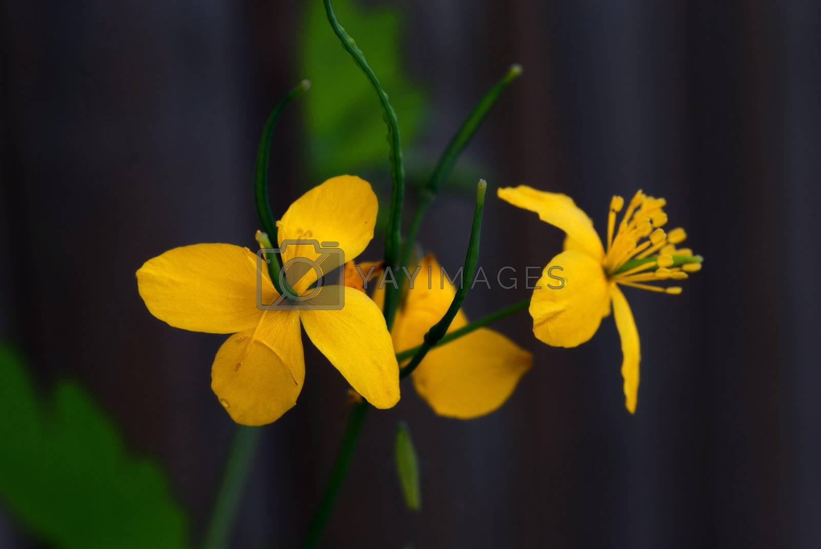 Spring Flowers by pazham
