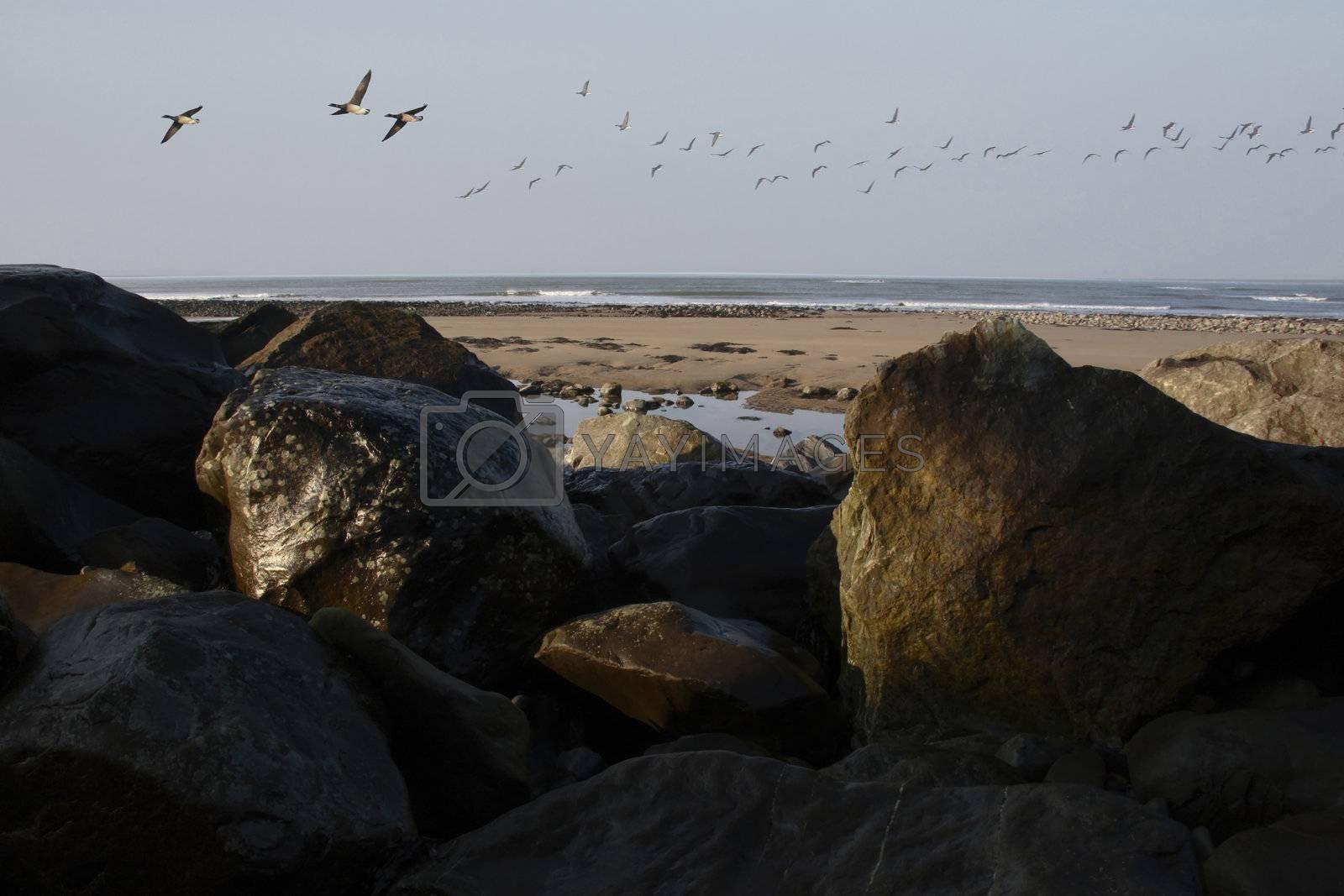 geese flight in kerry ireland