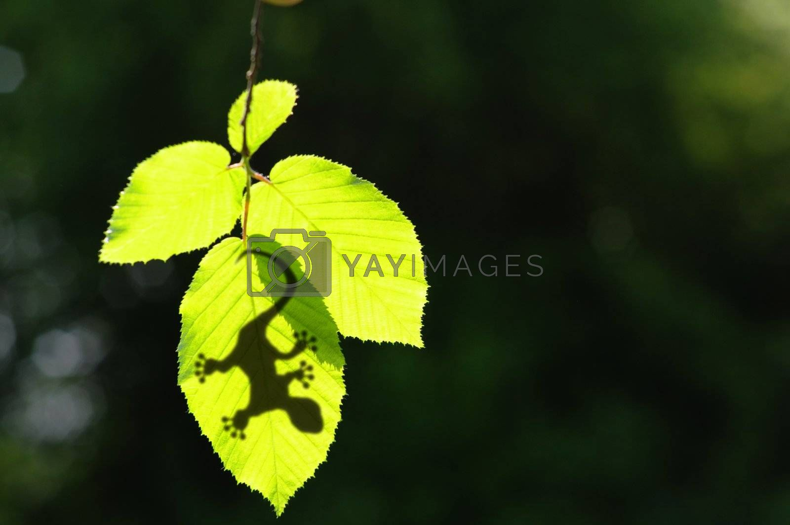 gecko shadow on green leaf texture showing nature concept with copyspace