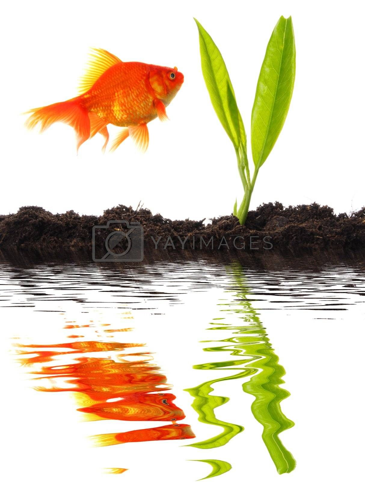 goldfish and young plant showing growth or nature concept