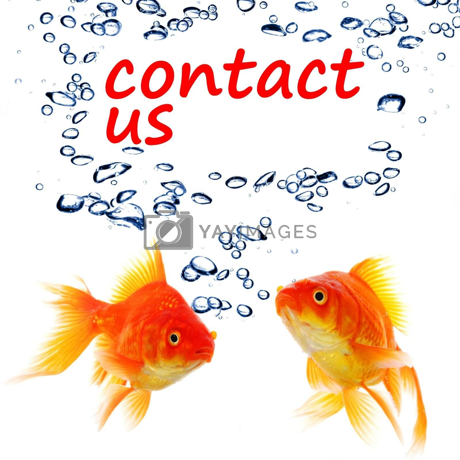 contact us concept with goldfish showing support service or email communication