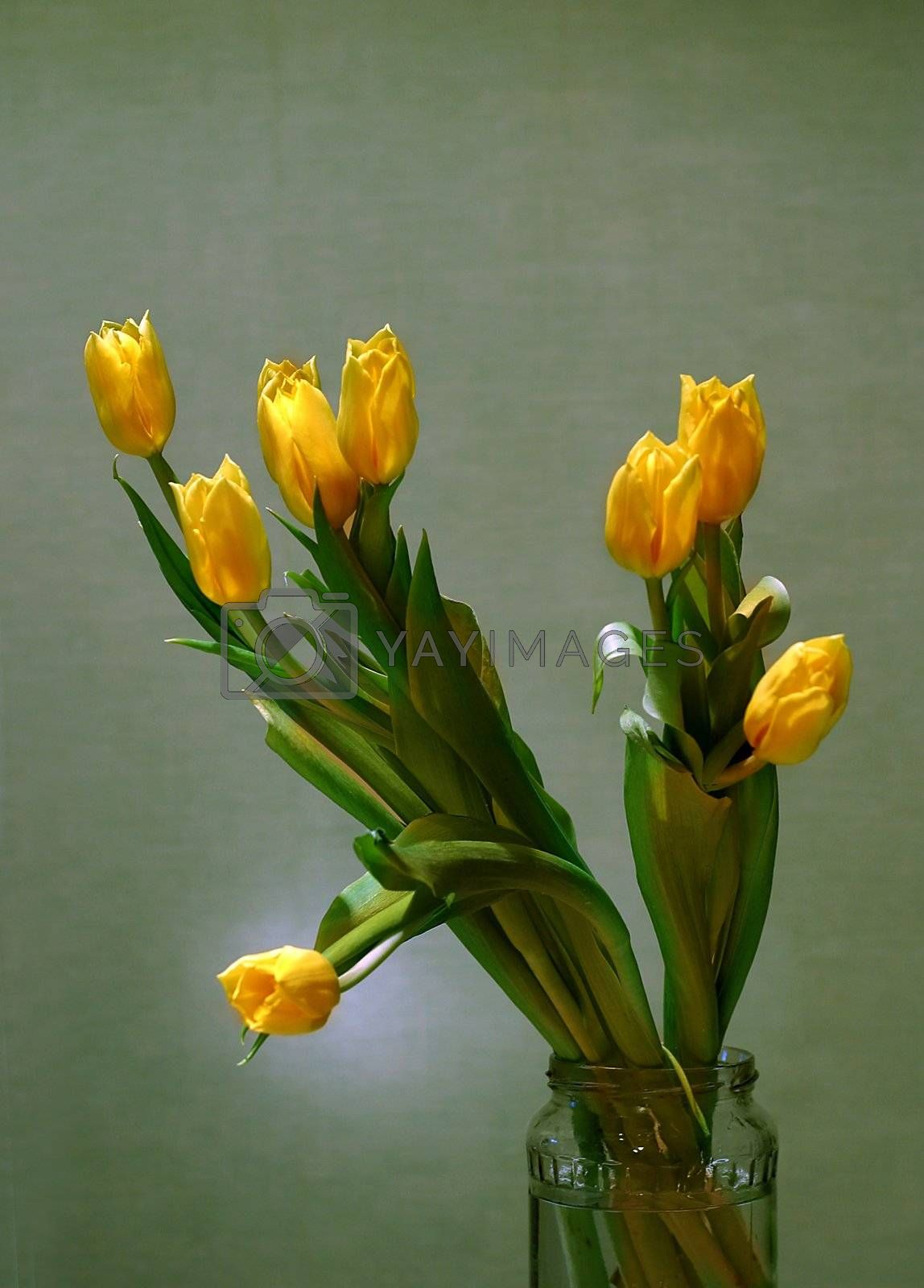 The image of a bouquet of yellow tulips on a green background