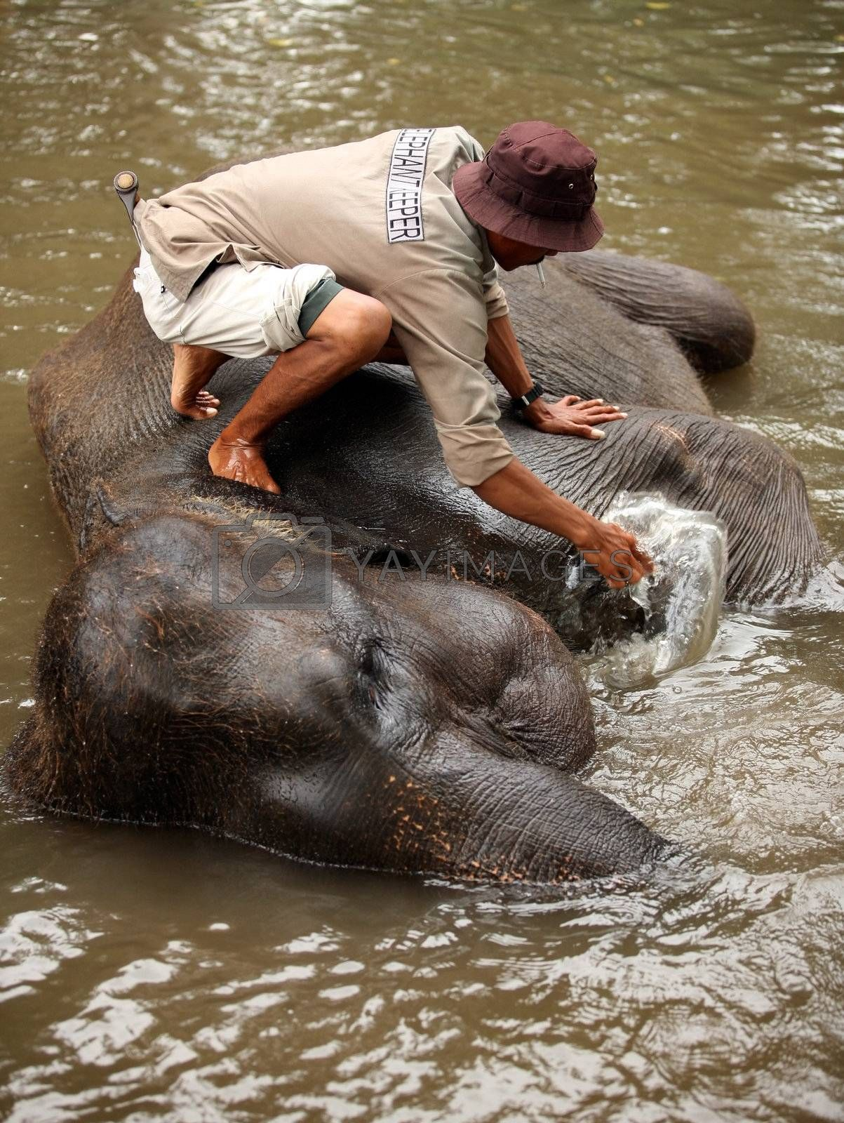 The man washes the elephant