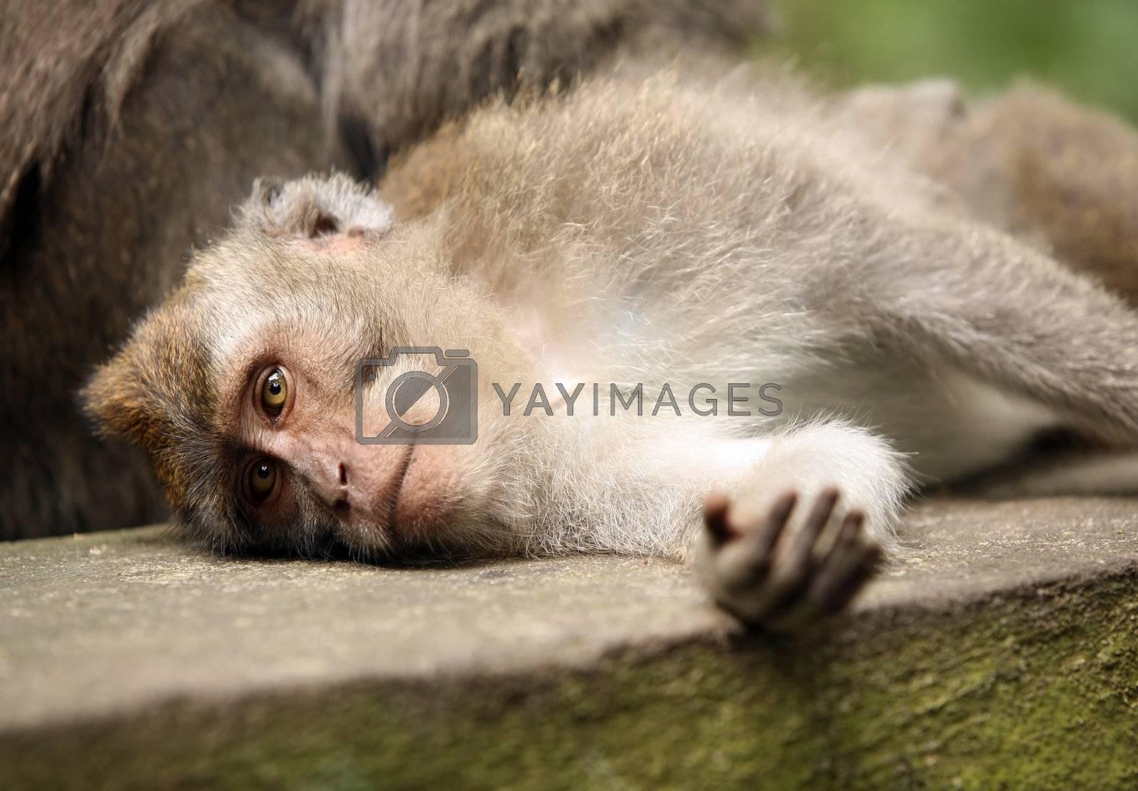 Monkey by friday