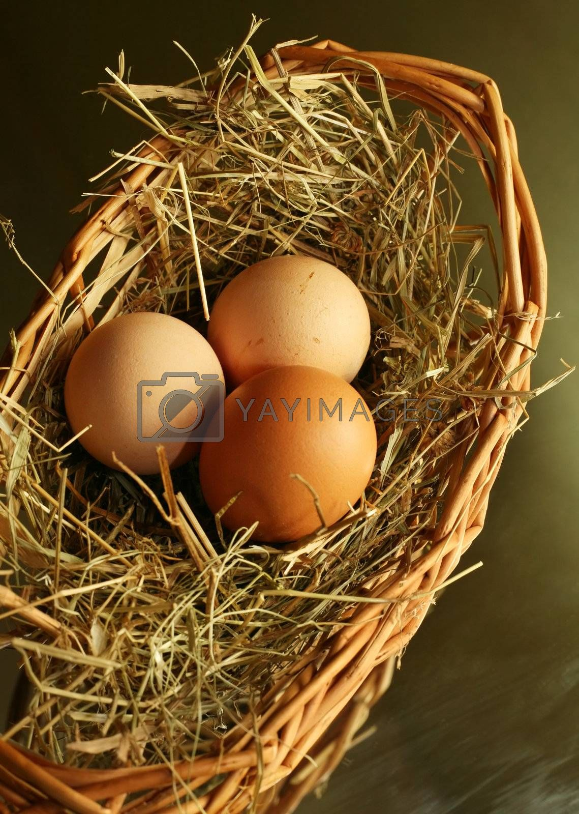 Three brown eggs latent in a dry grass