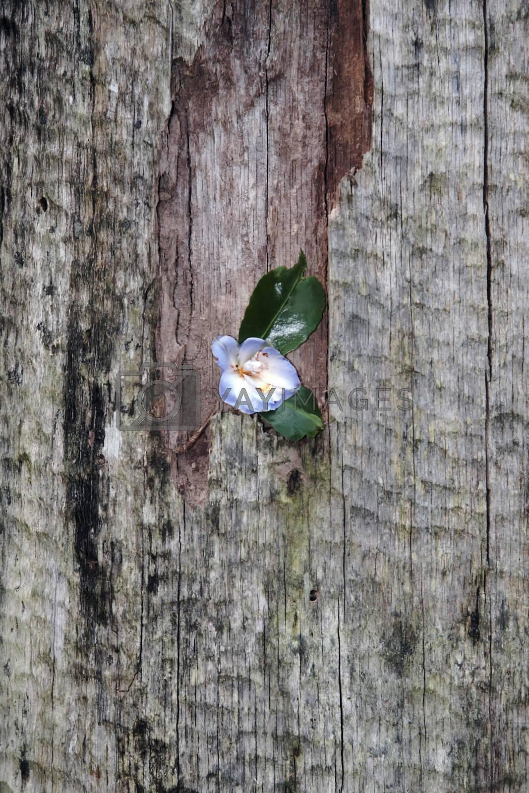 flower against the tree bark