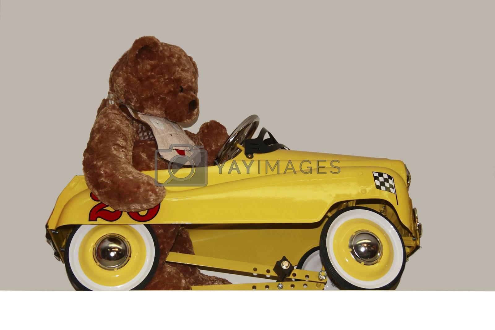 a bear taking a drive