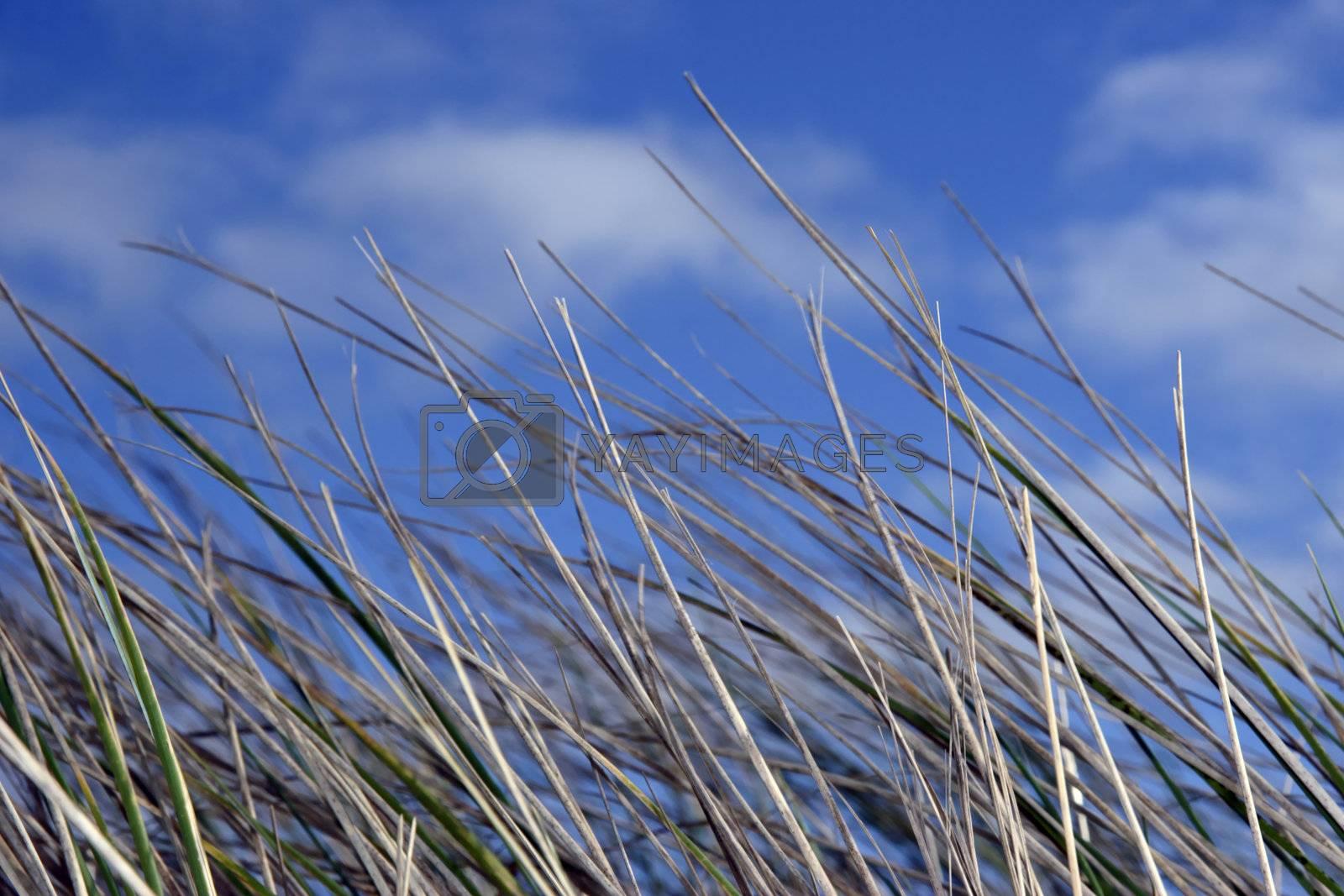 doon grass 5 by morrbyte