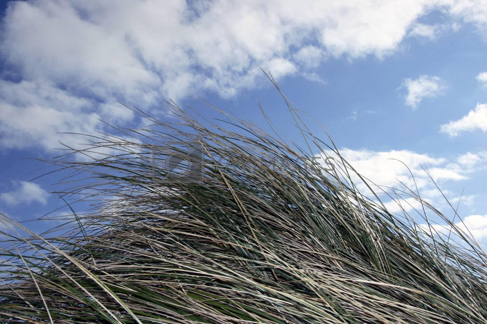 tall grass in irelands coast