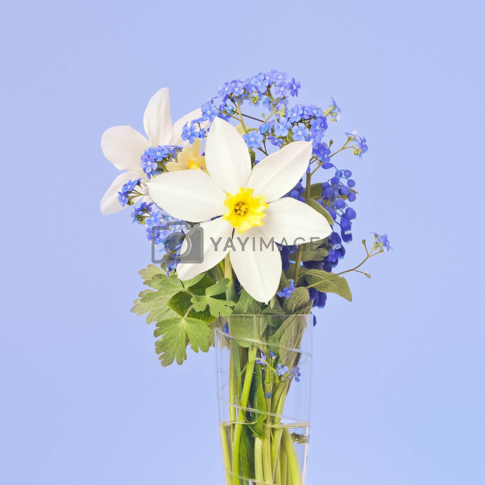 An image of two white daffodil in a vase