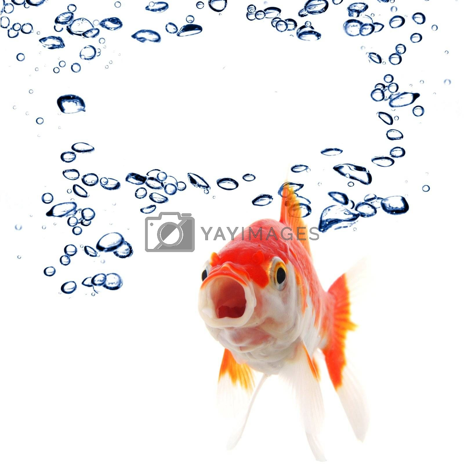 Royalty free image of goldfish and copyspace by gunnar3000