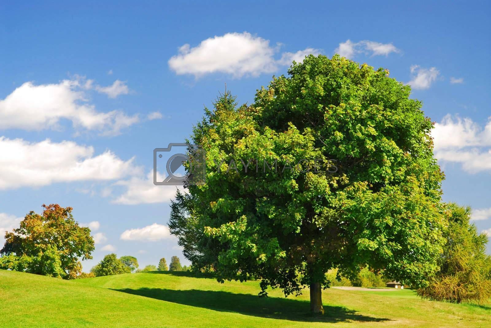 Green summer landscape with one leafy tree