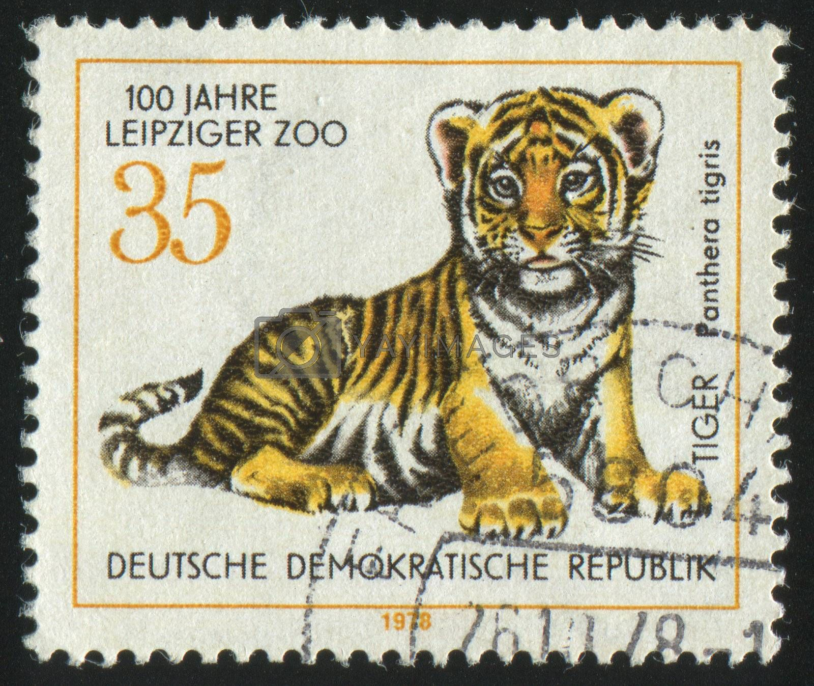 GERMANY- CIRCA 1978: stamp printed by Germany, shows Young tiger, circa 1978.
