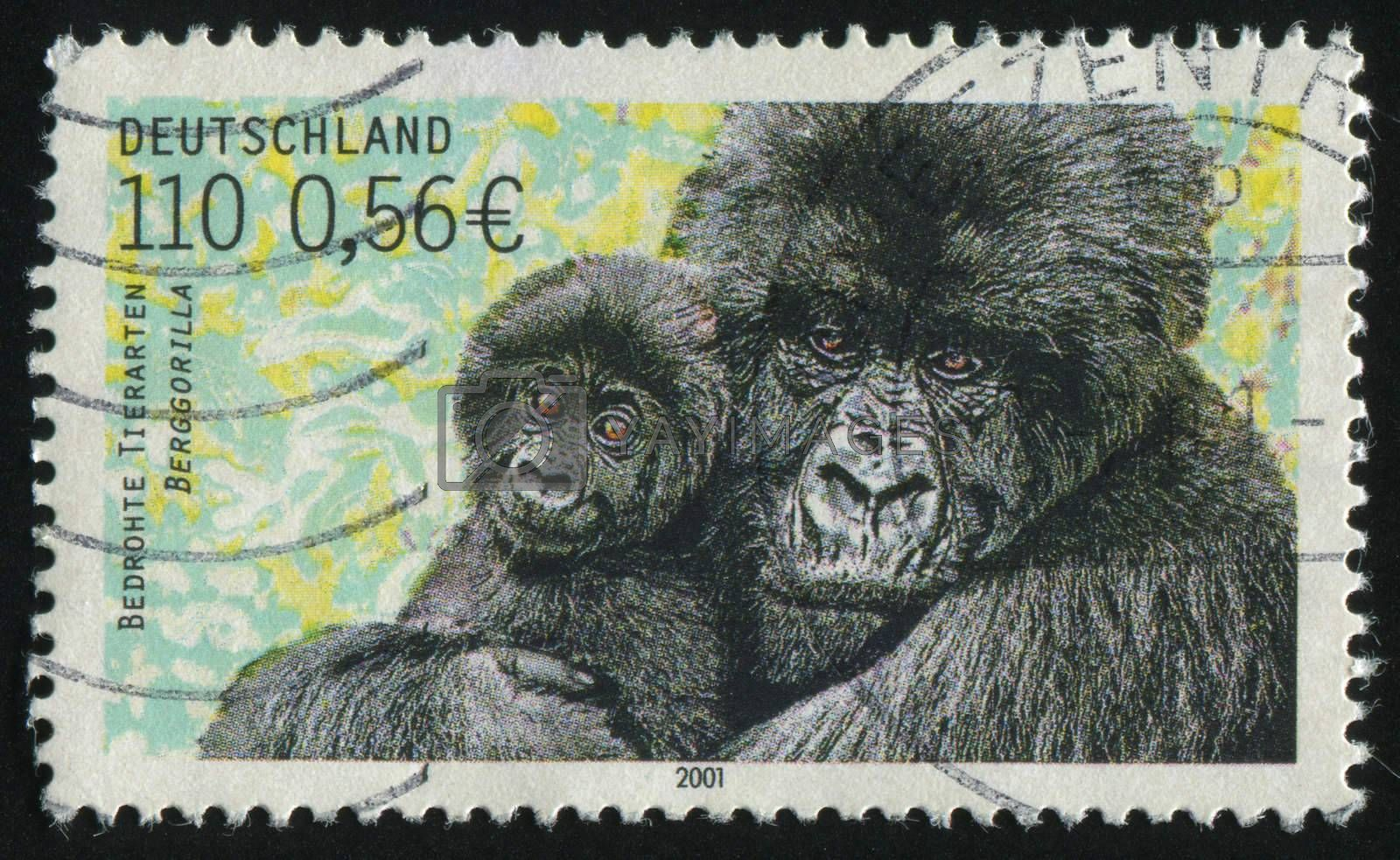 GERMANY- CIRCA 2001: stamp printed by Germany, shows  Mountain gorilla, circa 2001.