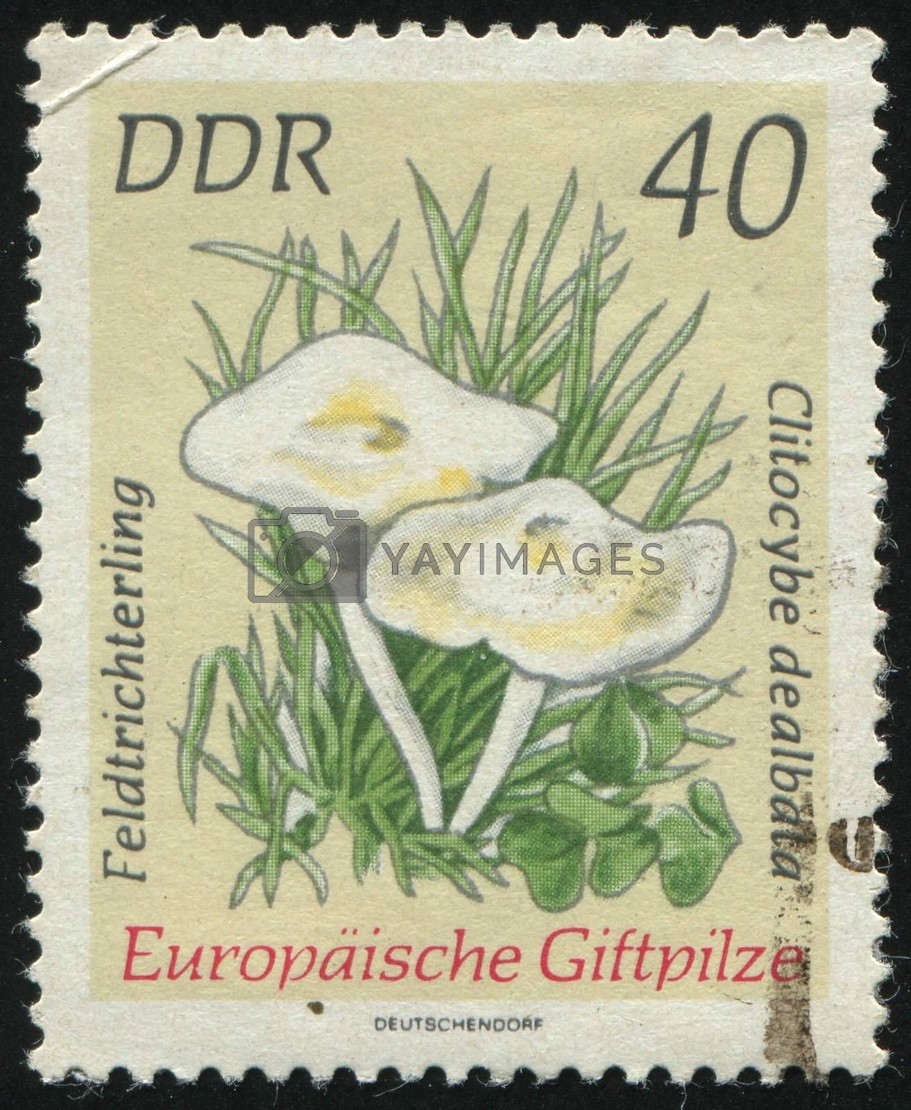 GERMANY- CIRCA 1974: stamp printed by Germany, shows Clitocybe dealbata, circa 1974.