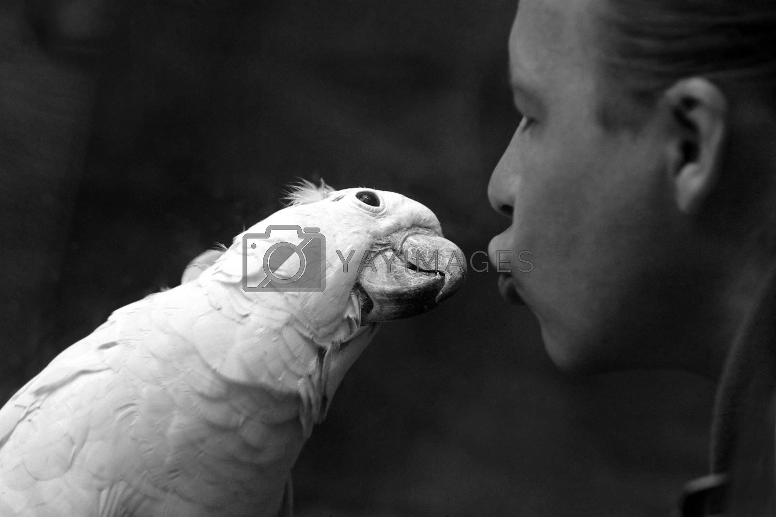 The person tries to kiss a white parrot. b/w