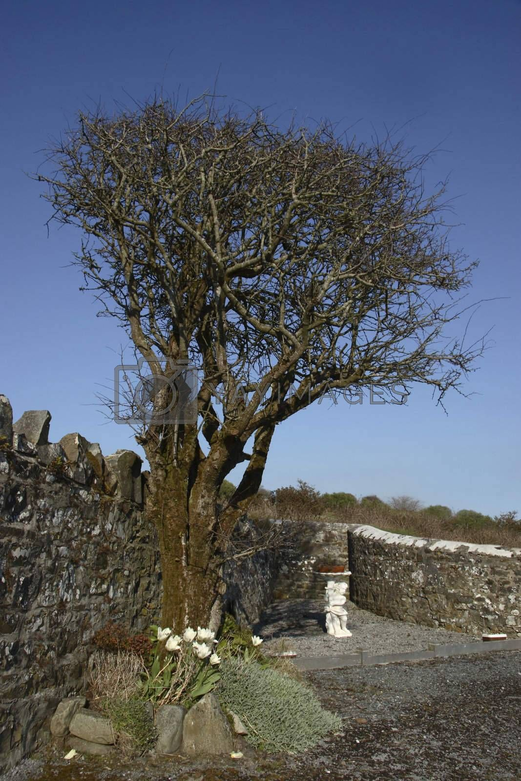 a tree against a stone wall