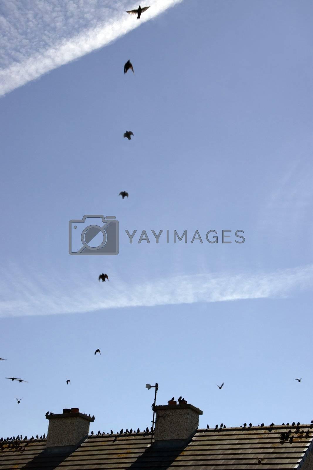 birds on a roof ii by morrbyte
