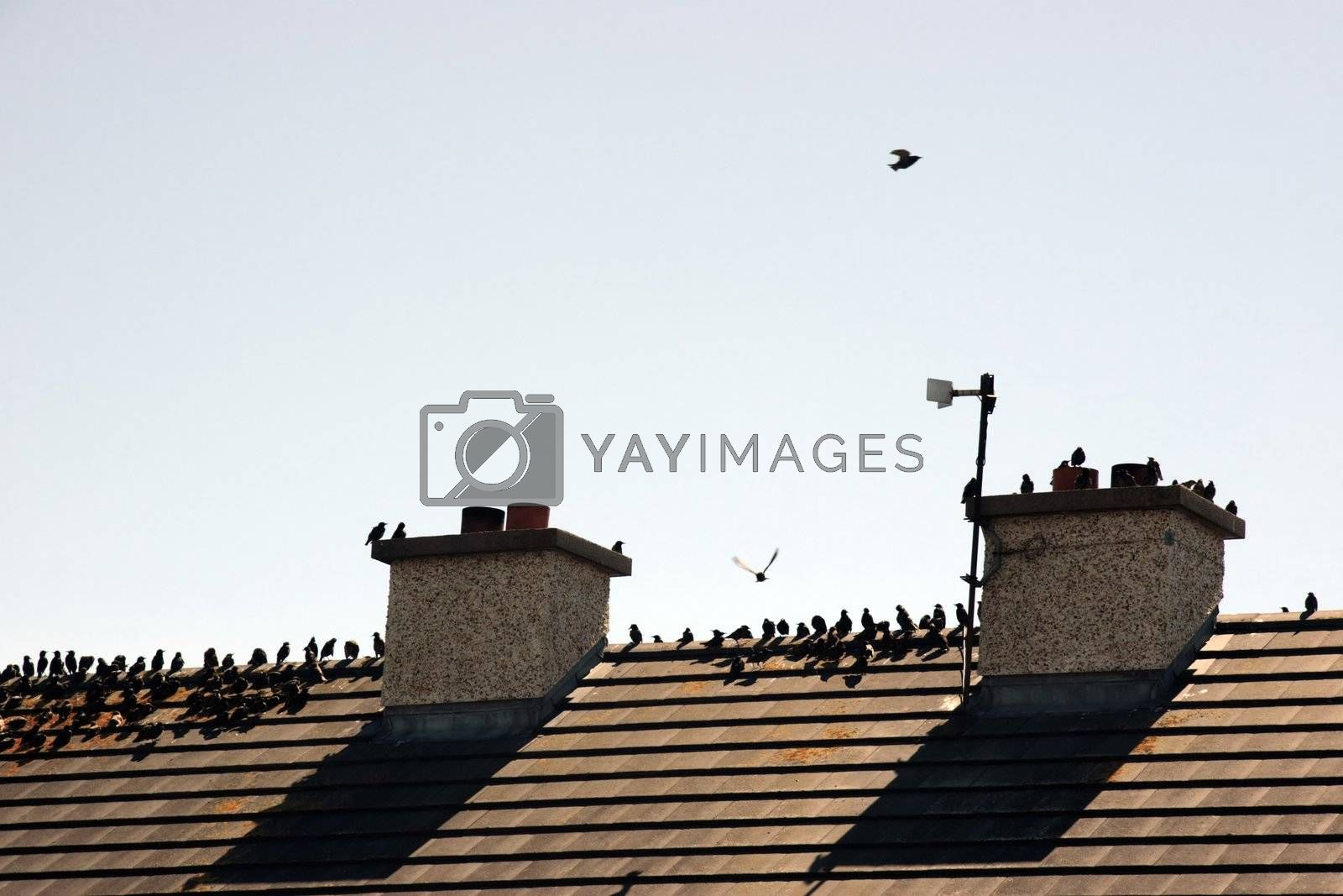a gathering of birds on a roof