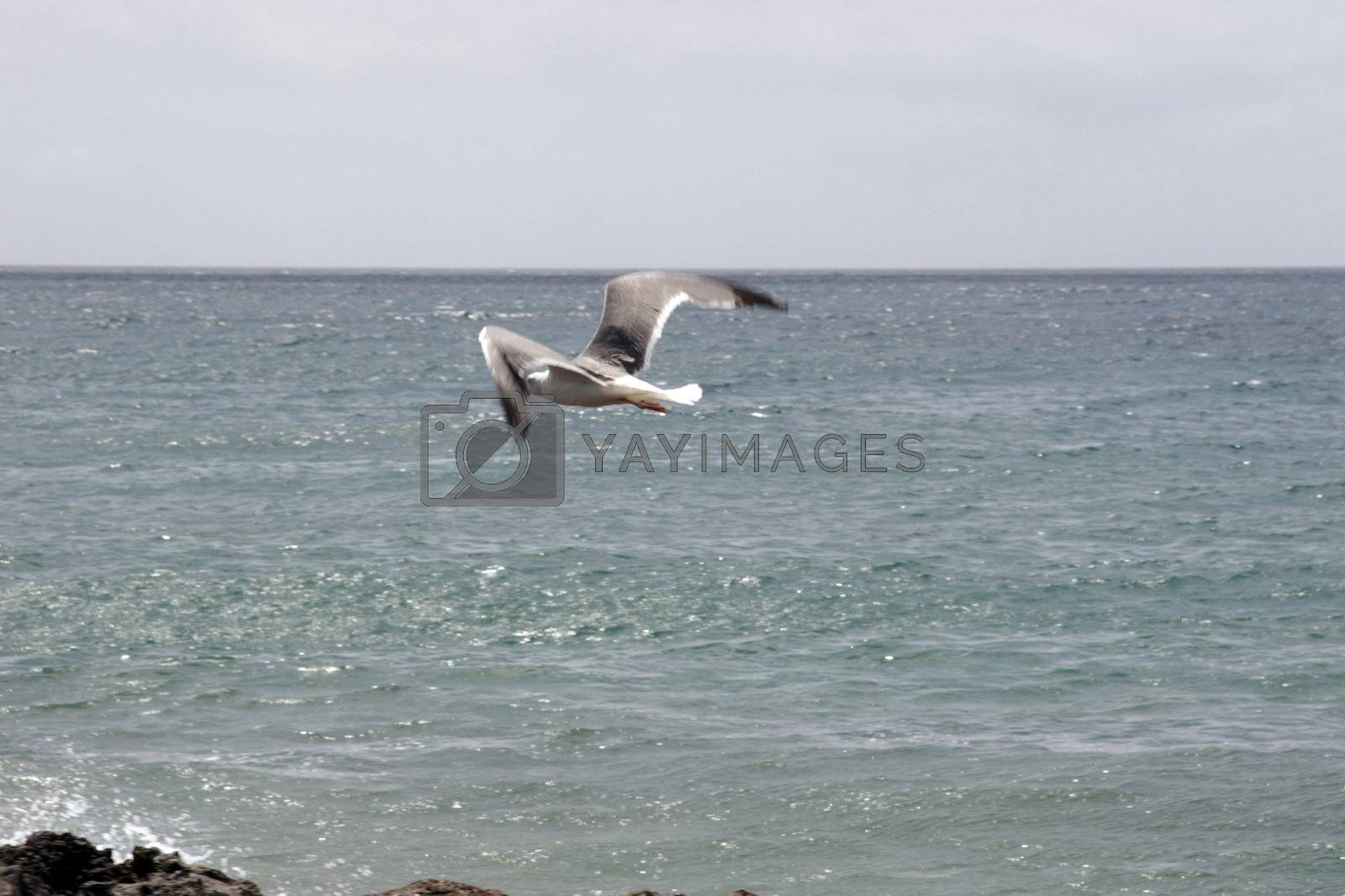 a seagull in flight over the sea