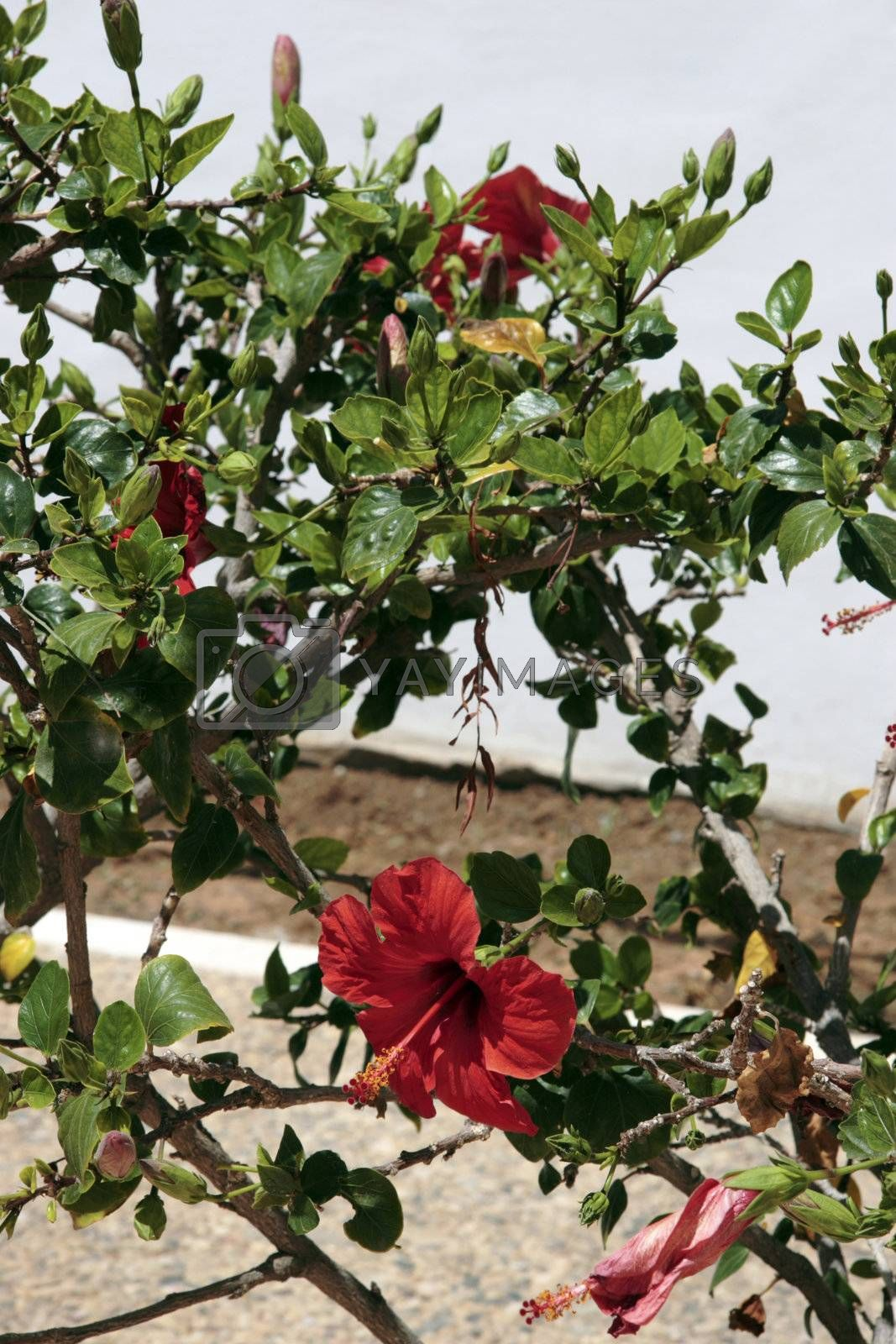 a flower on a path in lanzarote