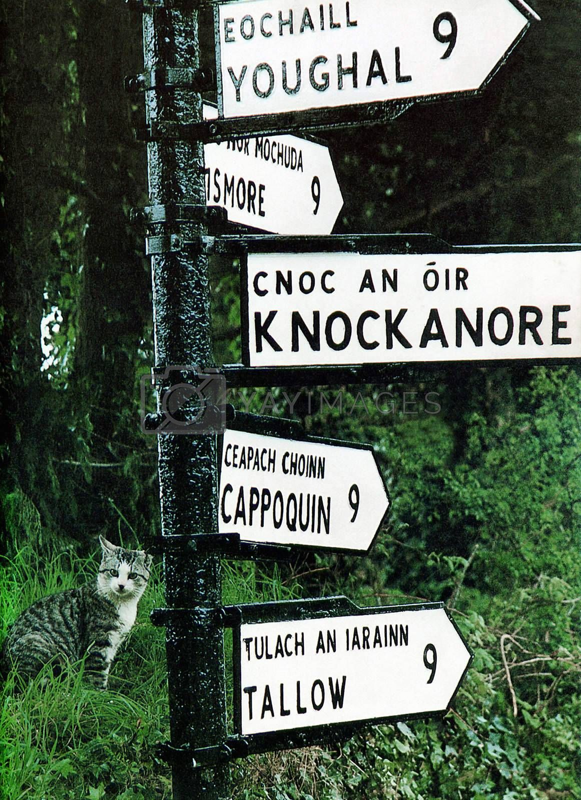 a cat at a sign post in ireland