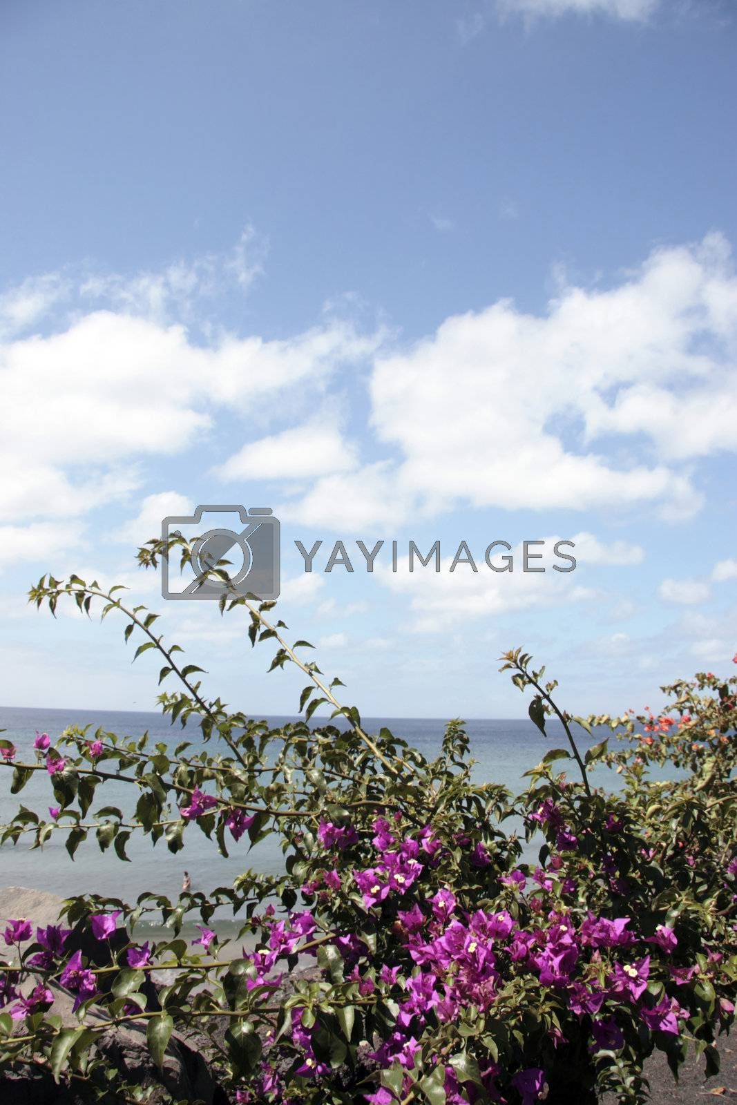 a view from the lanzarote coast line