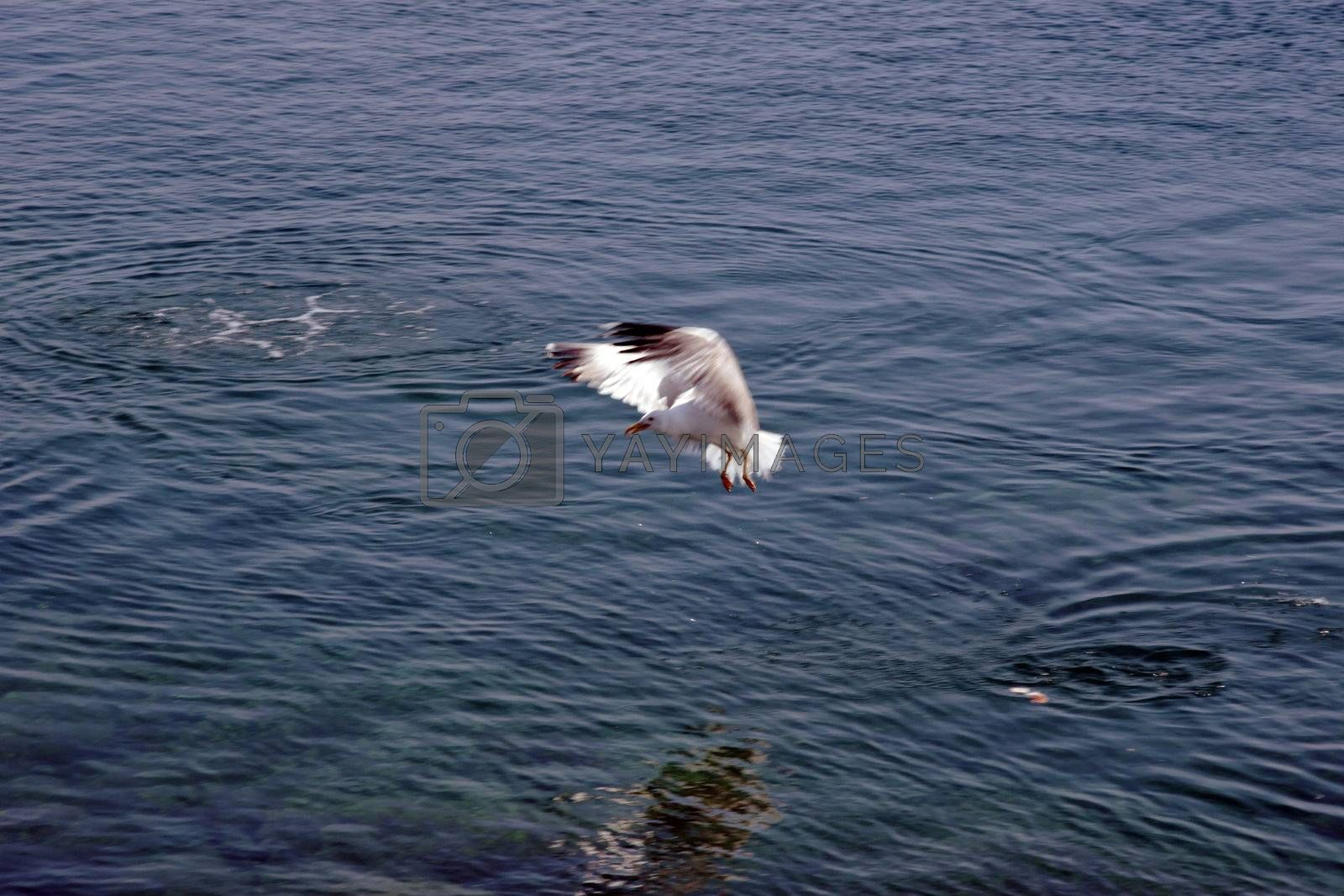 splash down by morrbyte